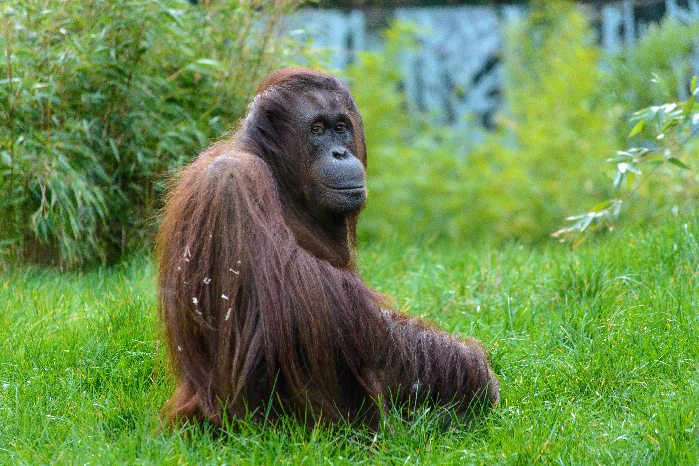 Free Images : grass, animal, wildlife, zoo, mammal, fauna