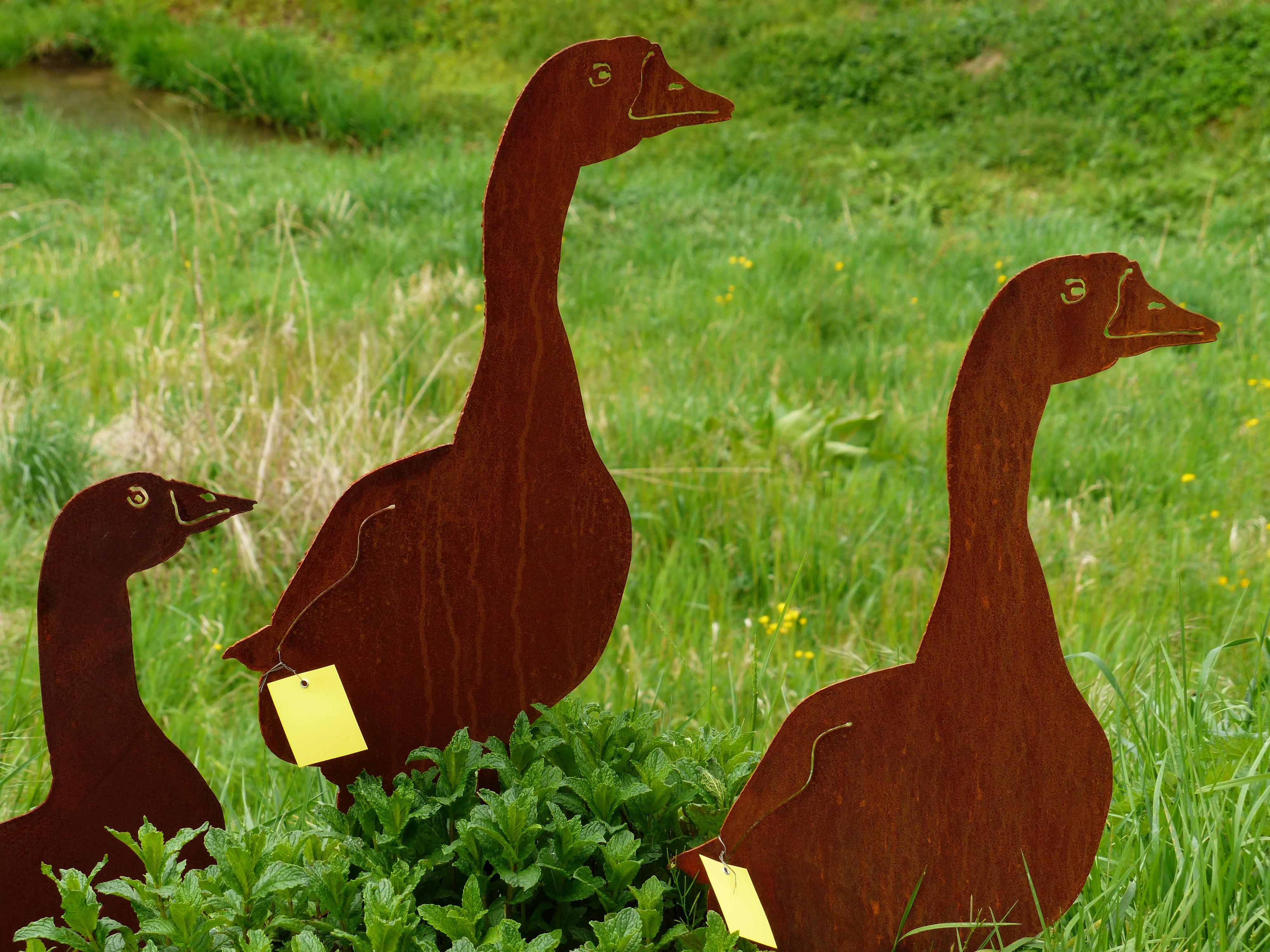 Images gratuites herbe animal faune d coration m tal for Decoration jardin oiseau metal