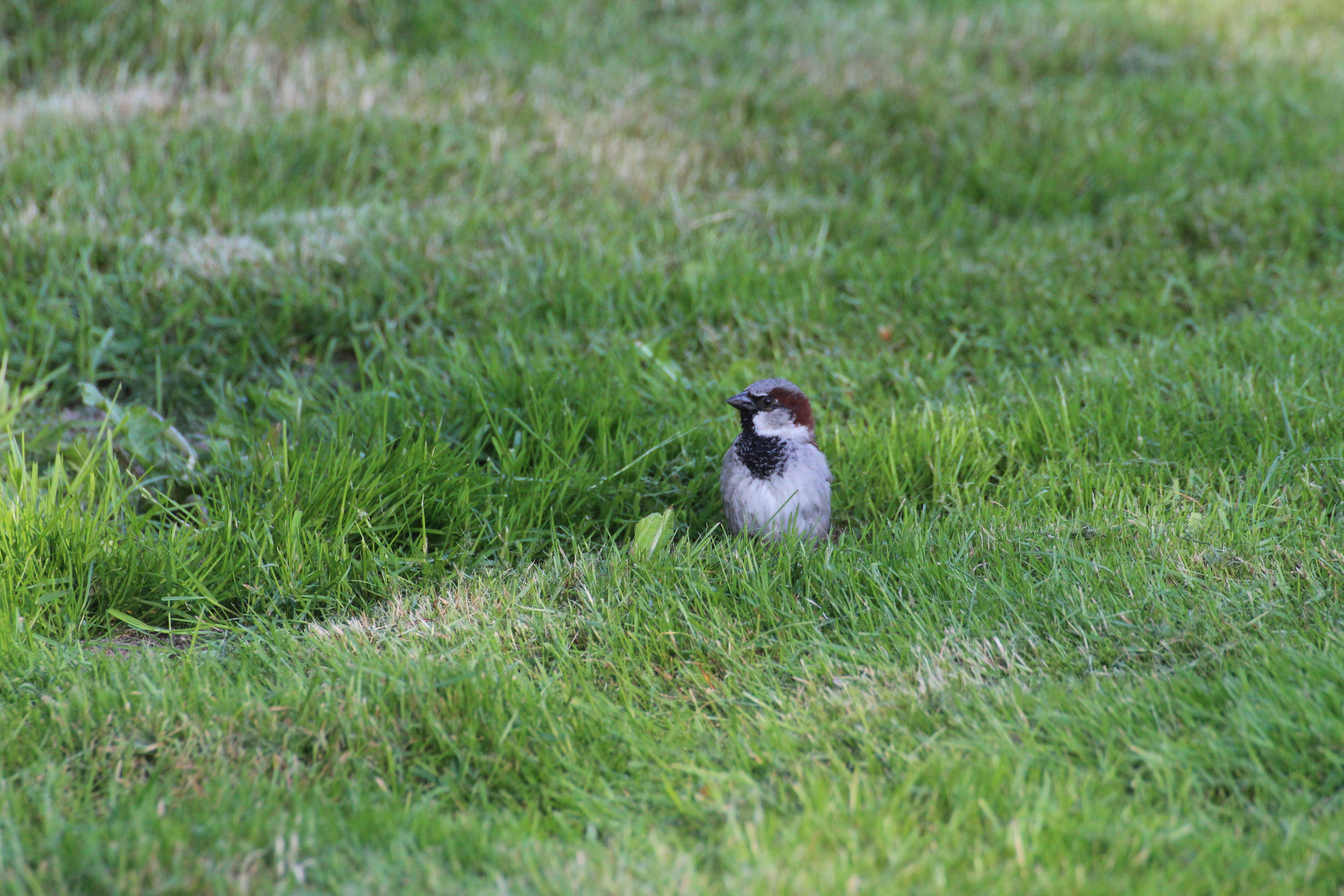 vogel bild sperling bilder vogel