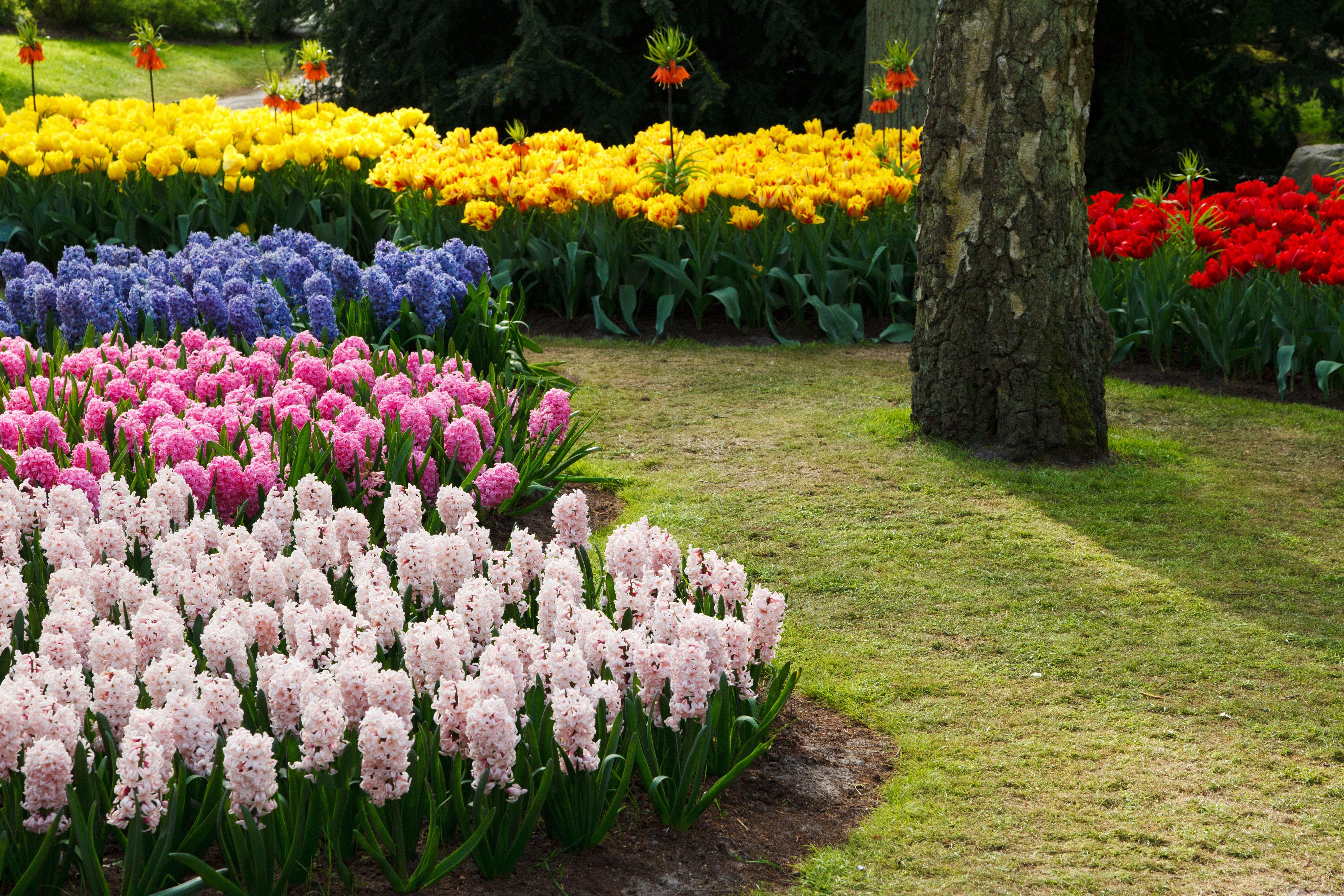 куриное филе цветы на участке фото и название объявление продаже, покупке