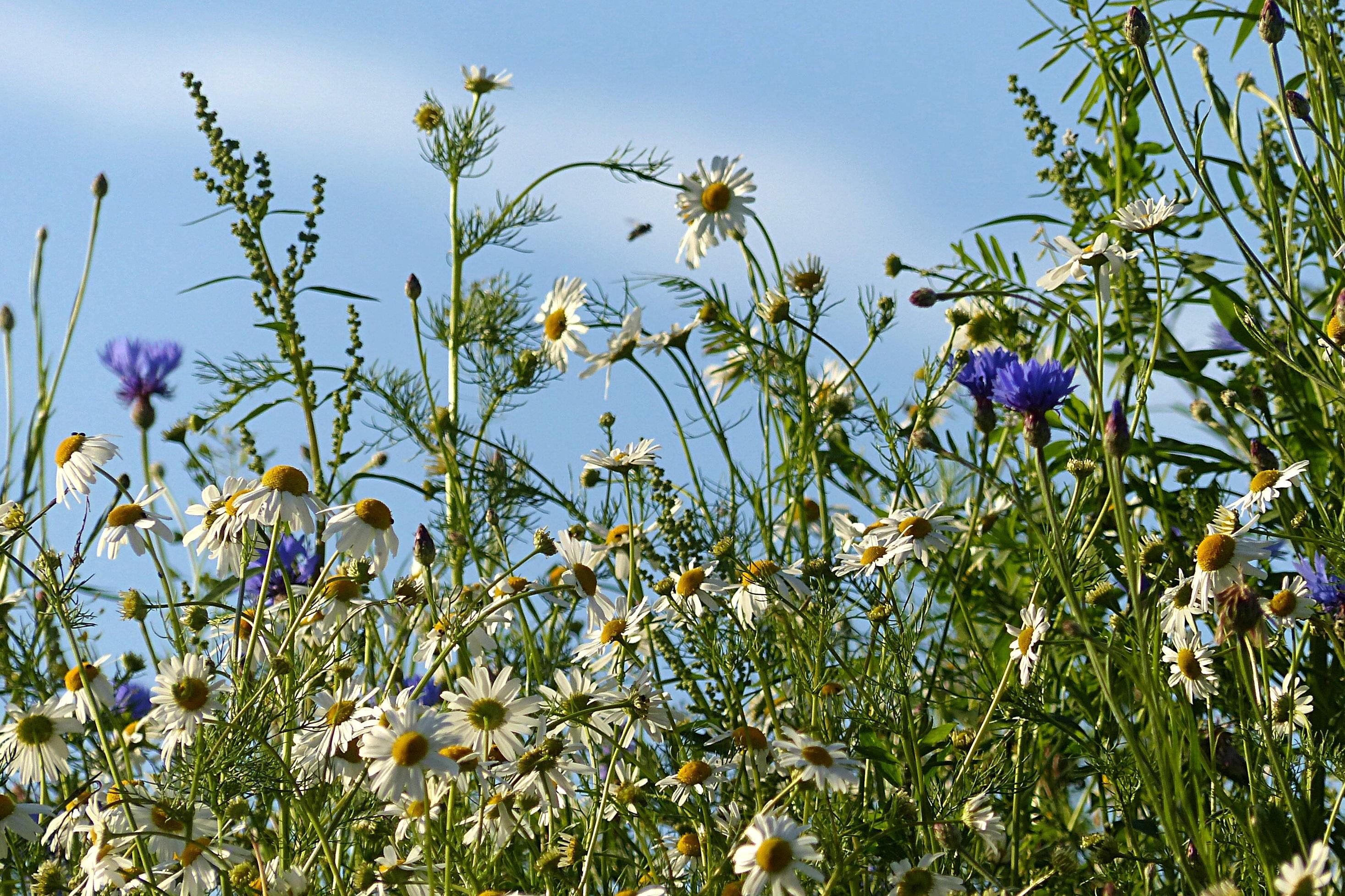 полевые цветы с белой скалы фото цена