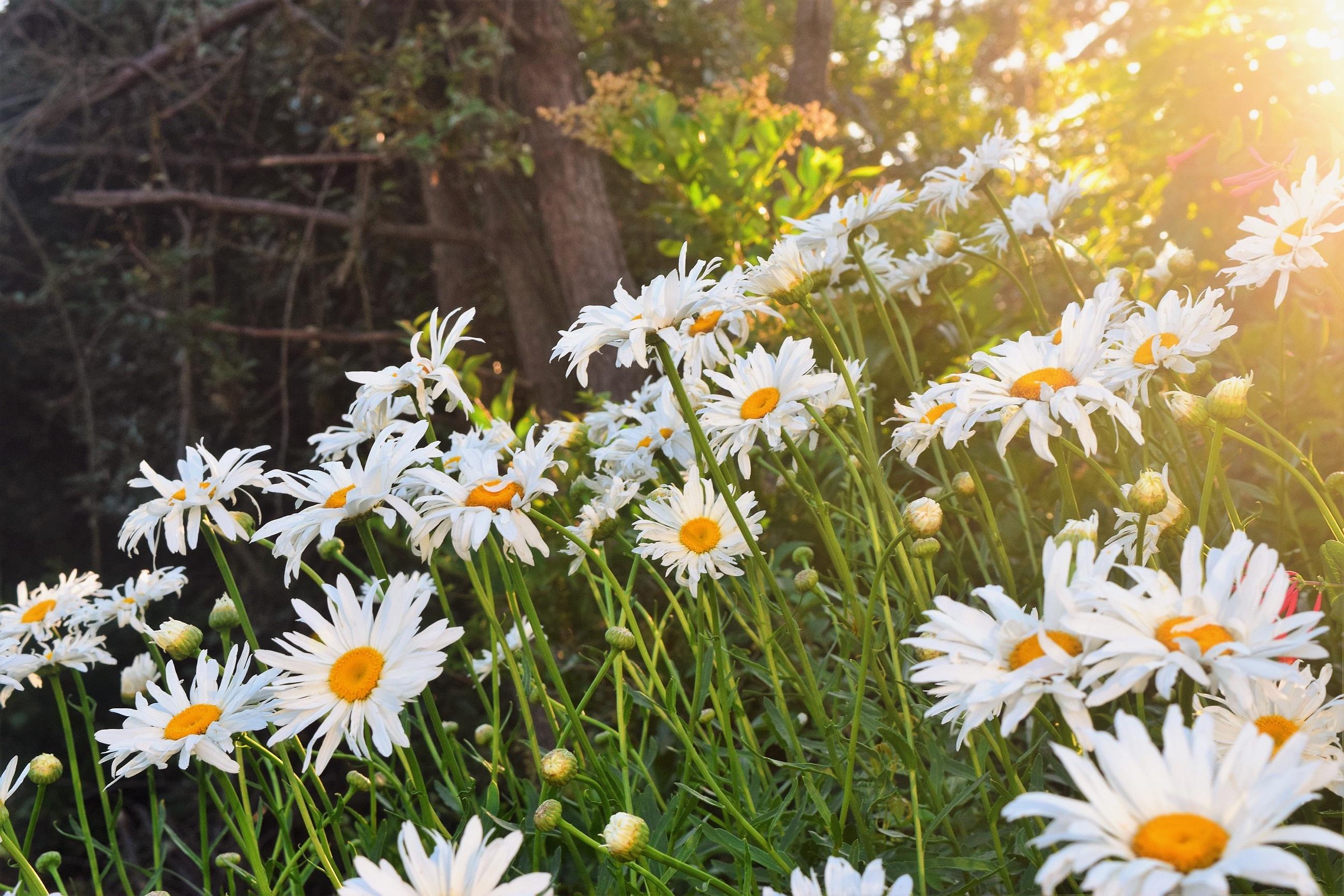 Images Gratuites Herbe Fleur Pelouse Prairie Botanique Jardin