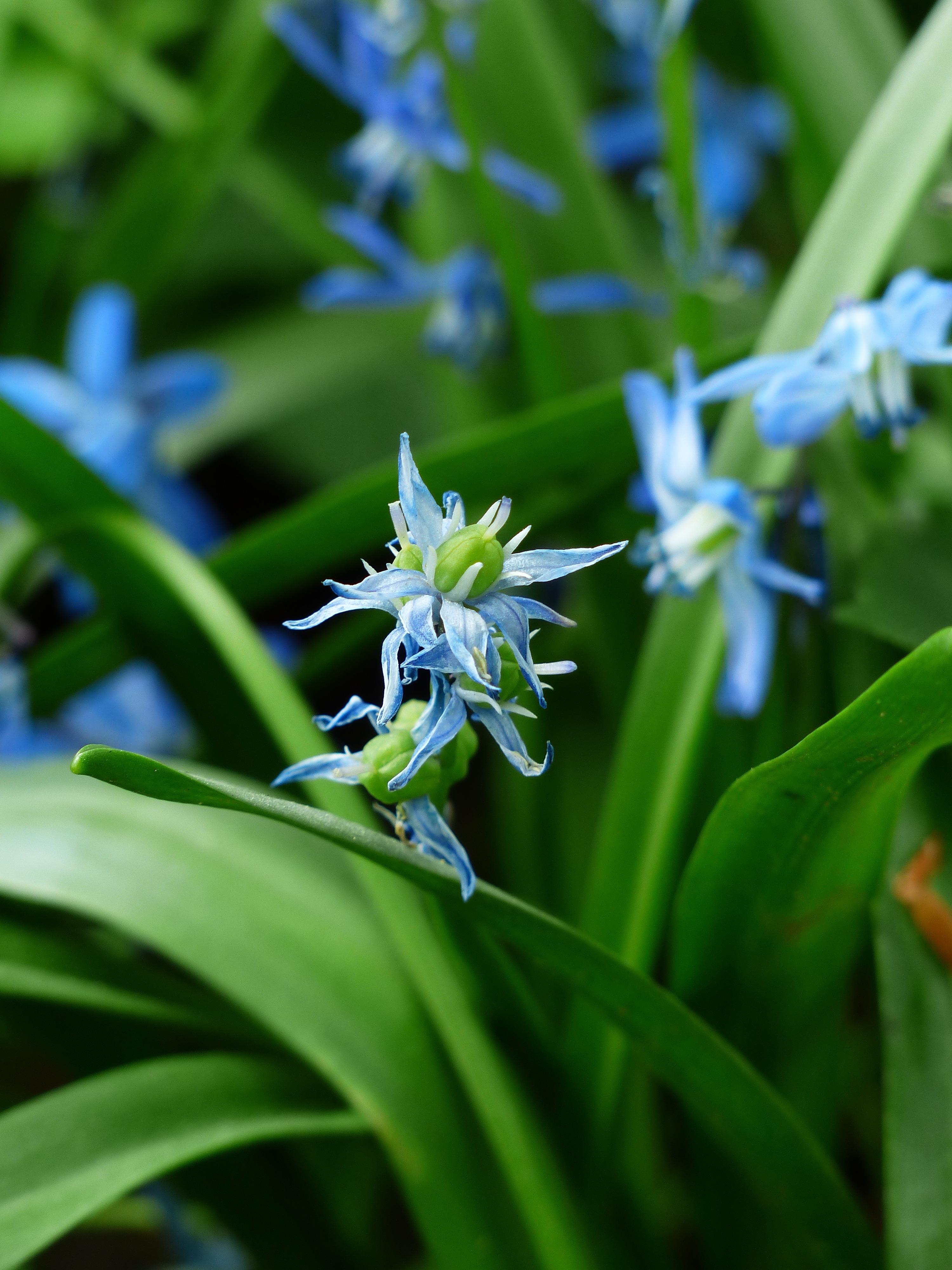 images gratuites herbe fleur prairie floraison vert insecte botanique bleu flore. Black Bedroom Furniture Sets. Home Design Ideas