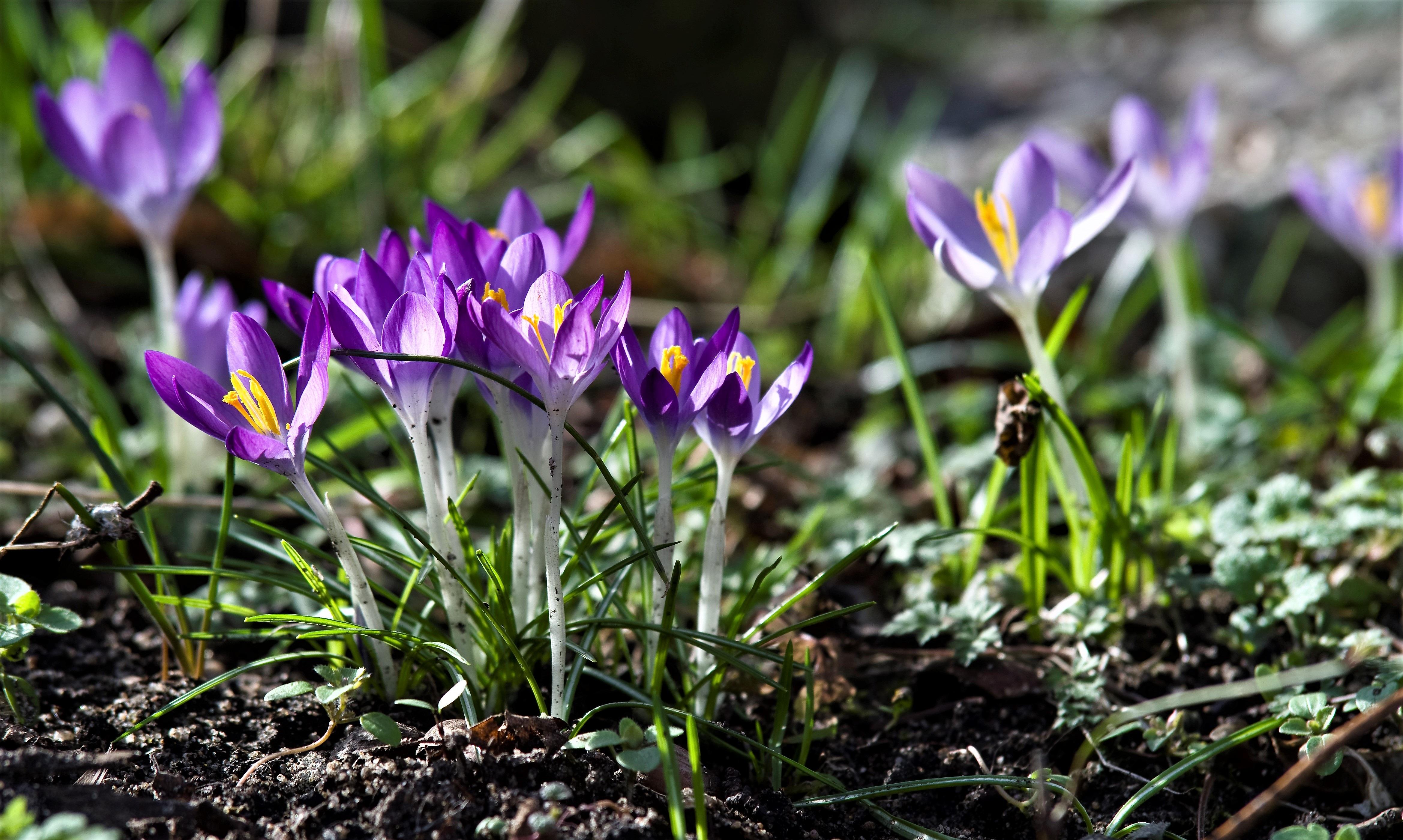 открытки расцветающее растение весной фото цветами смайлик