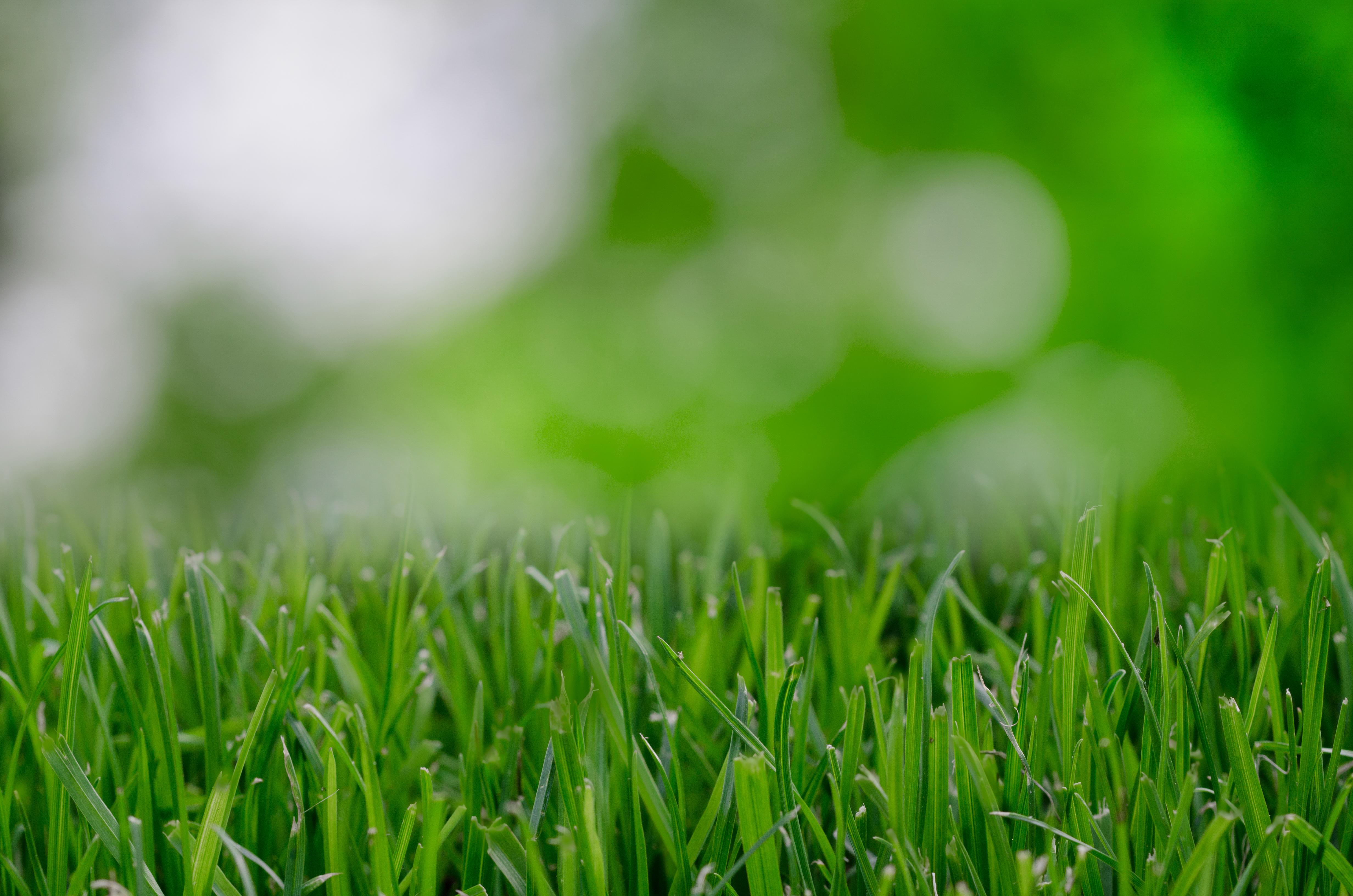 Grass Blur Plant Field Lawn Meadow Sunlight Leaf Flower Environment Green Soil Garden Blurred Eco Close