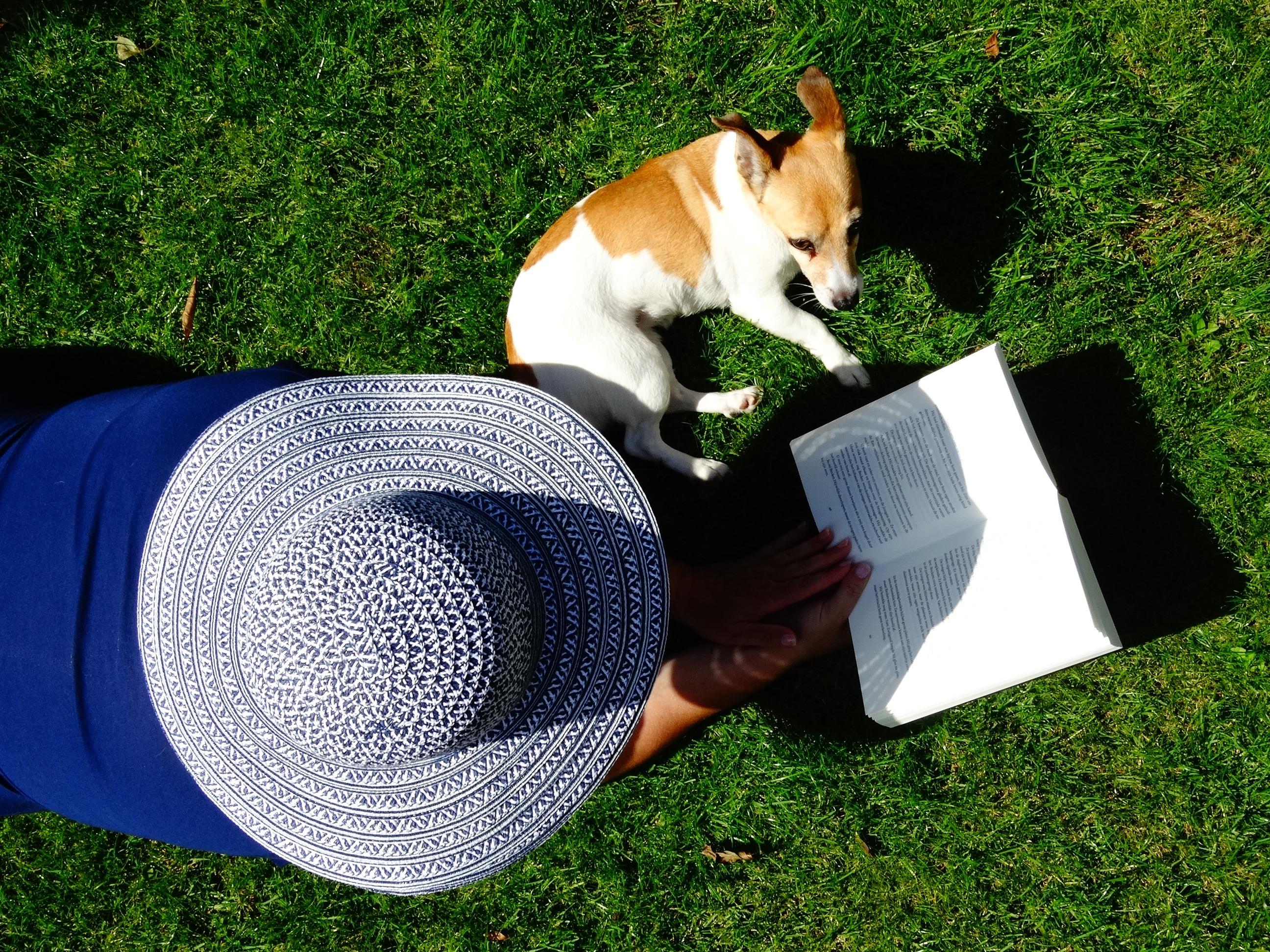 df5612b5f58 tráva rezervovat číst trávník štěně Pes zvíře letní domácí zvíře zelená  odpočinout si savec čepice zahrada