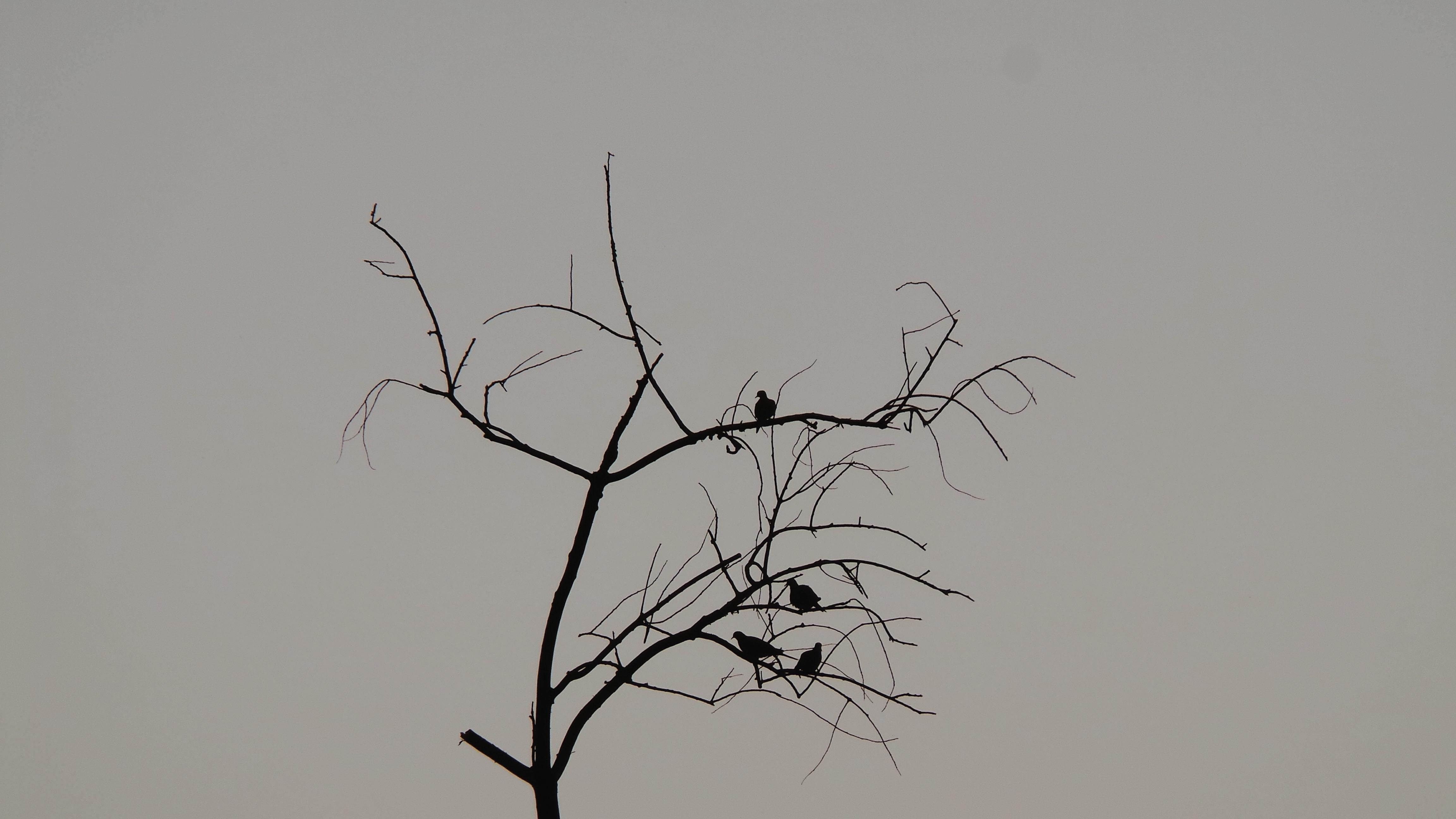 Gambar Rumput Cabang Sayap Langit Angin Kawanan Garis