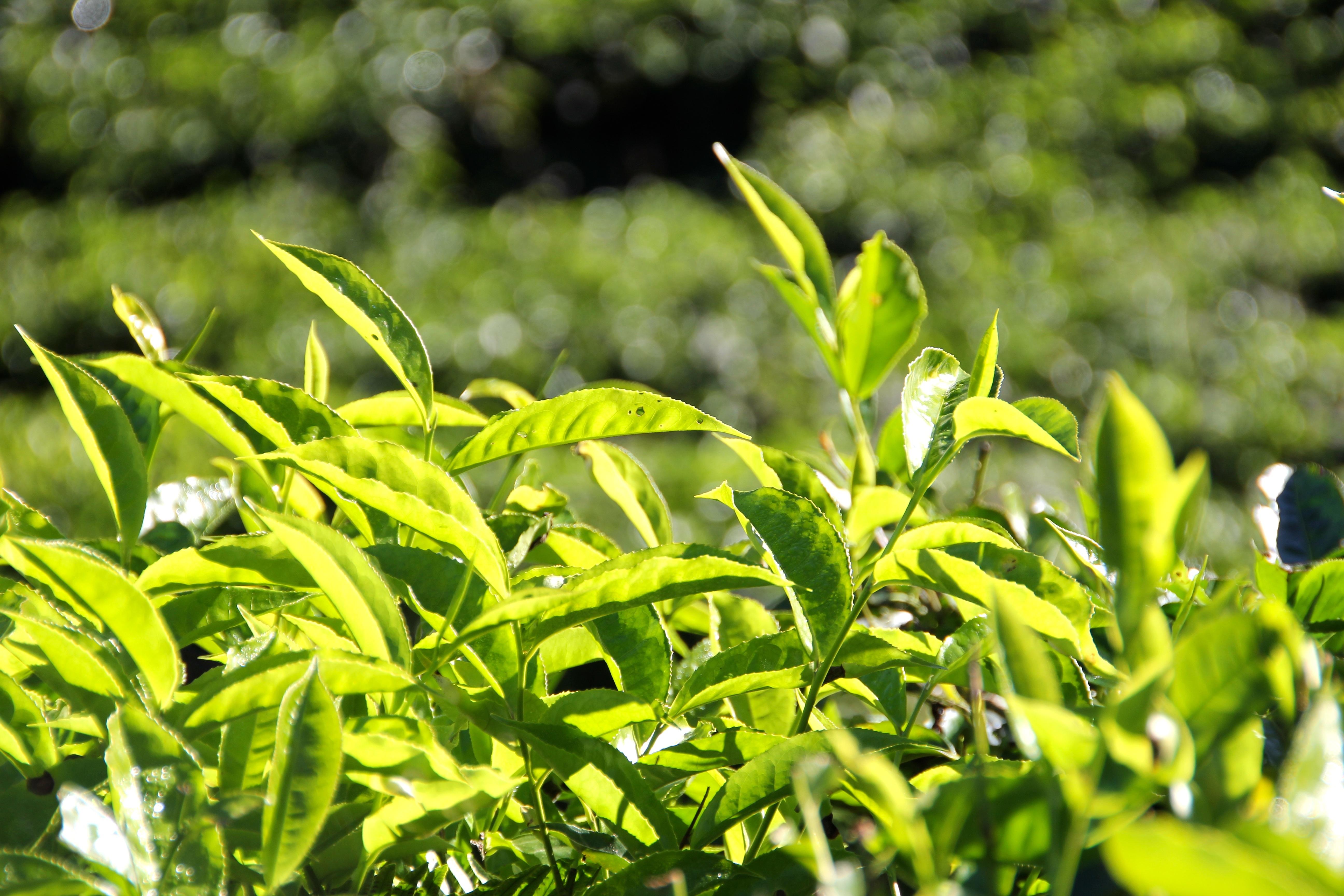 Gambar : cabang, menanam, halaman rumput, daun, bunga ...