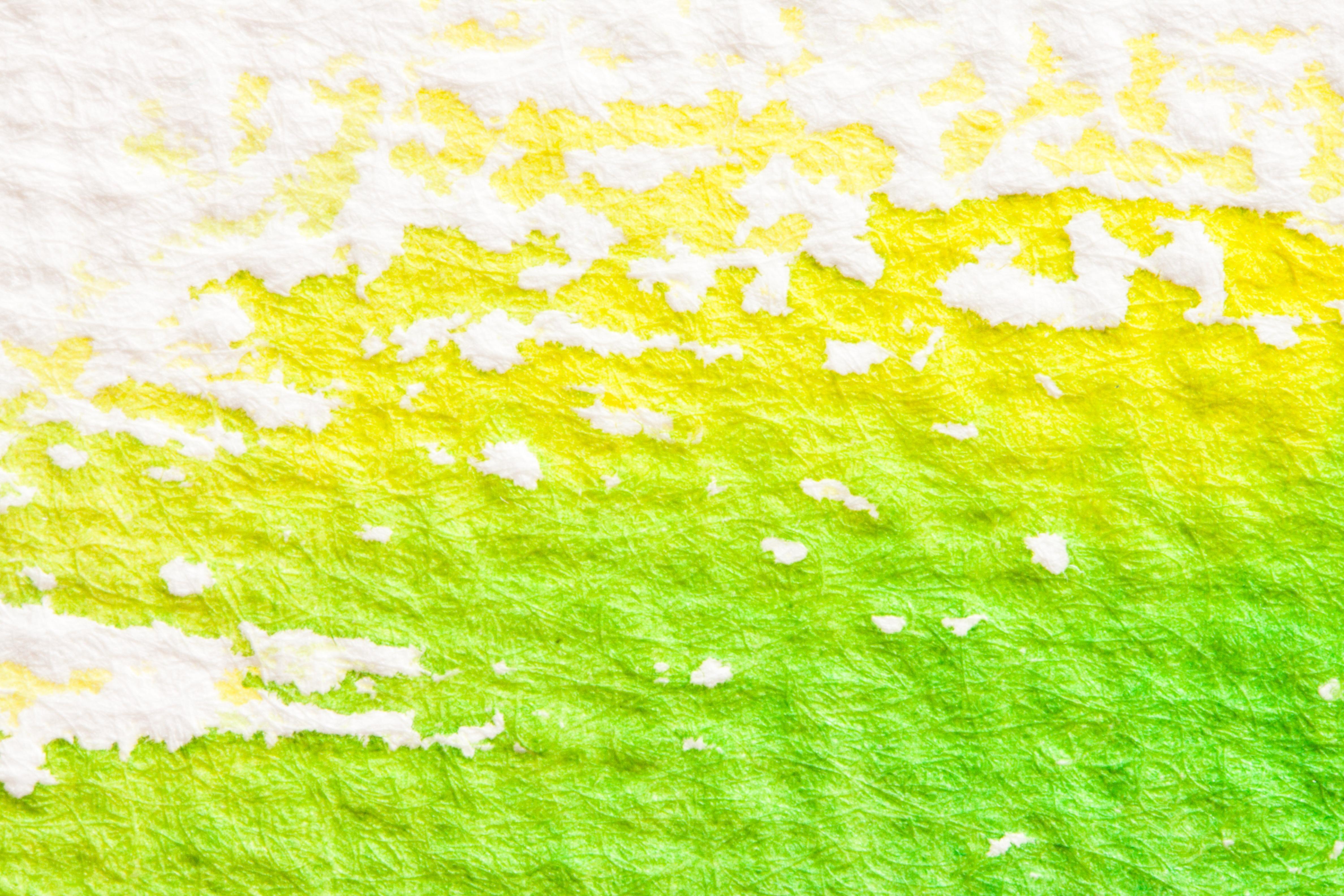 kostenlose foto gras ast pflanze rasen wiese sonnenlicht textur blatt blume fr hling. Black Bedroom Furniture Sets. Home Design Ideas