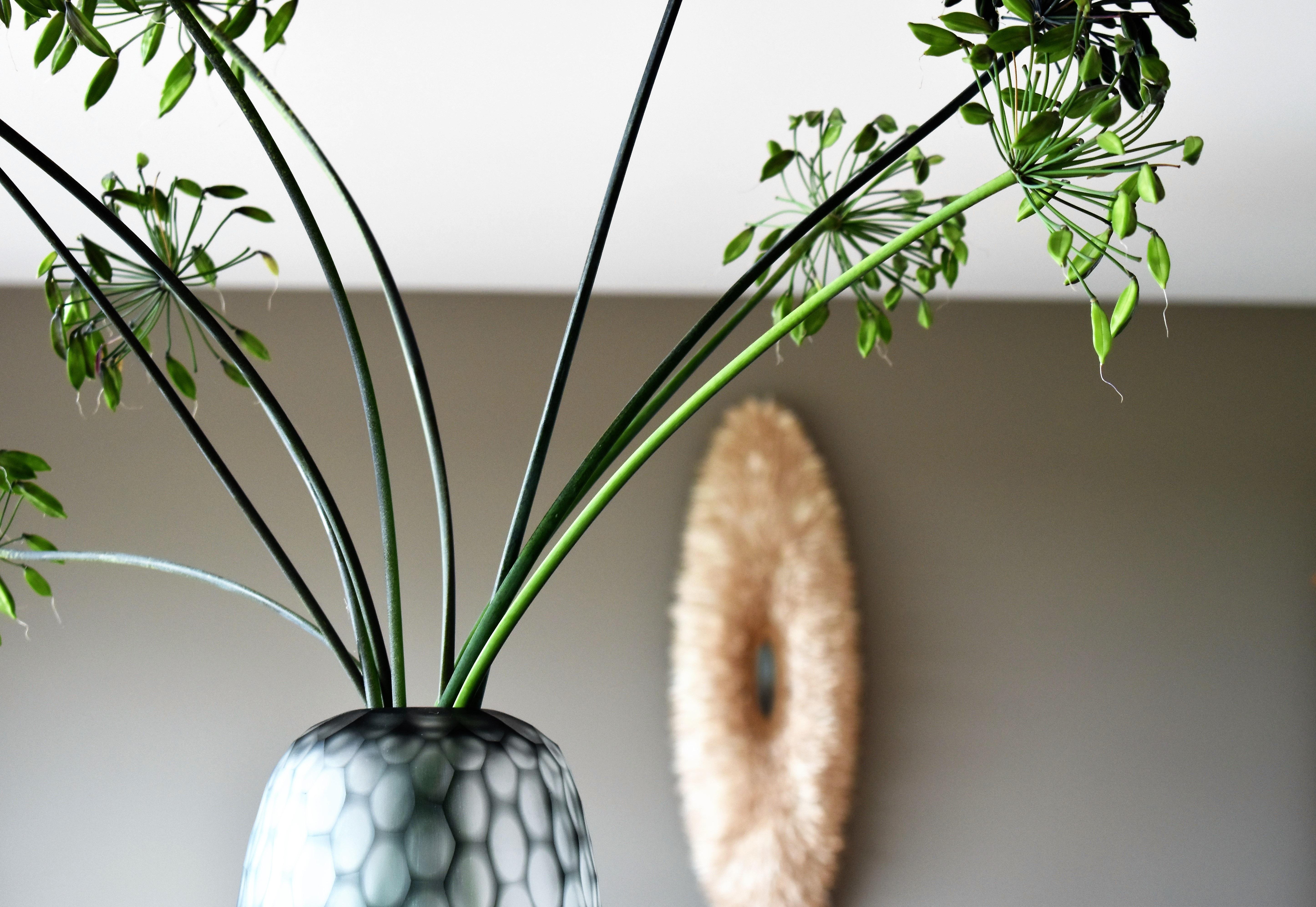 Lampada Fiore Tulipano : Immagini belle : ramo foglia fiore vaso verde produrre