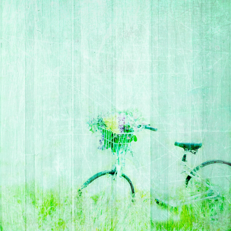 Free Images Branch Vintage Retro Texture Flower Bike