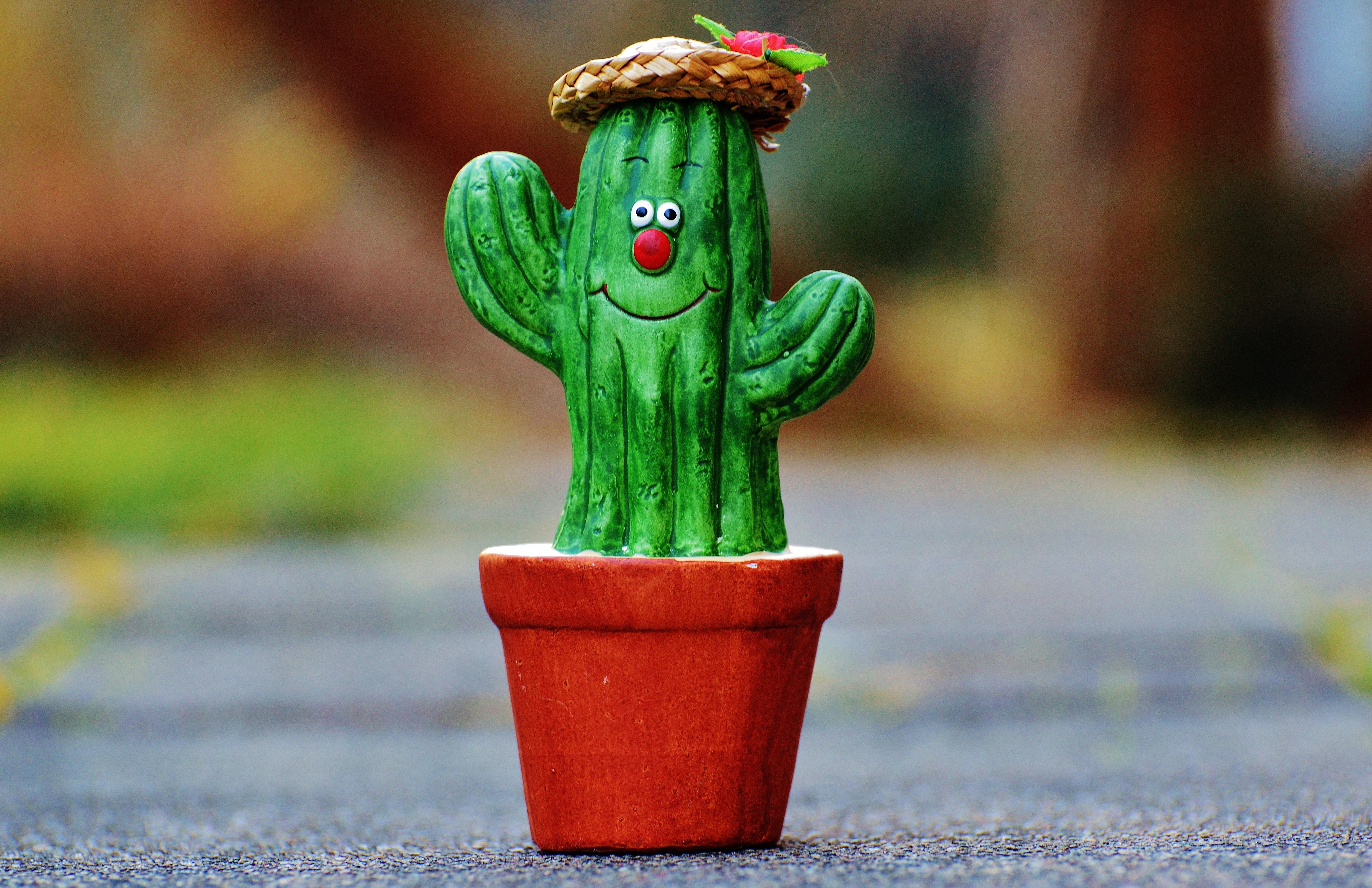Images Gratuites : herbe, cactus, fleur, mignonne, décoration, vert ...