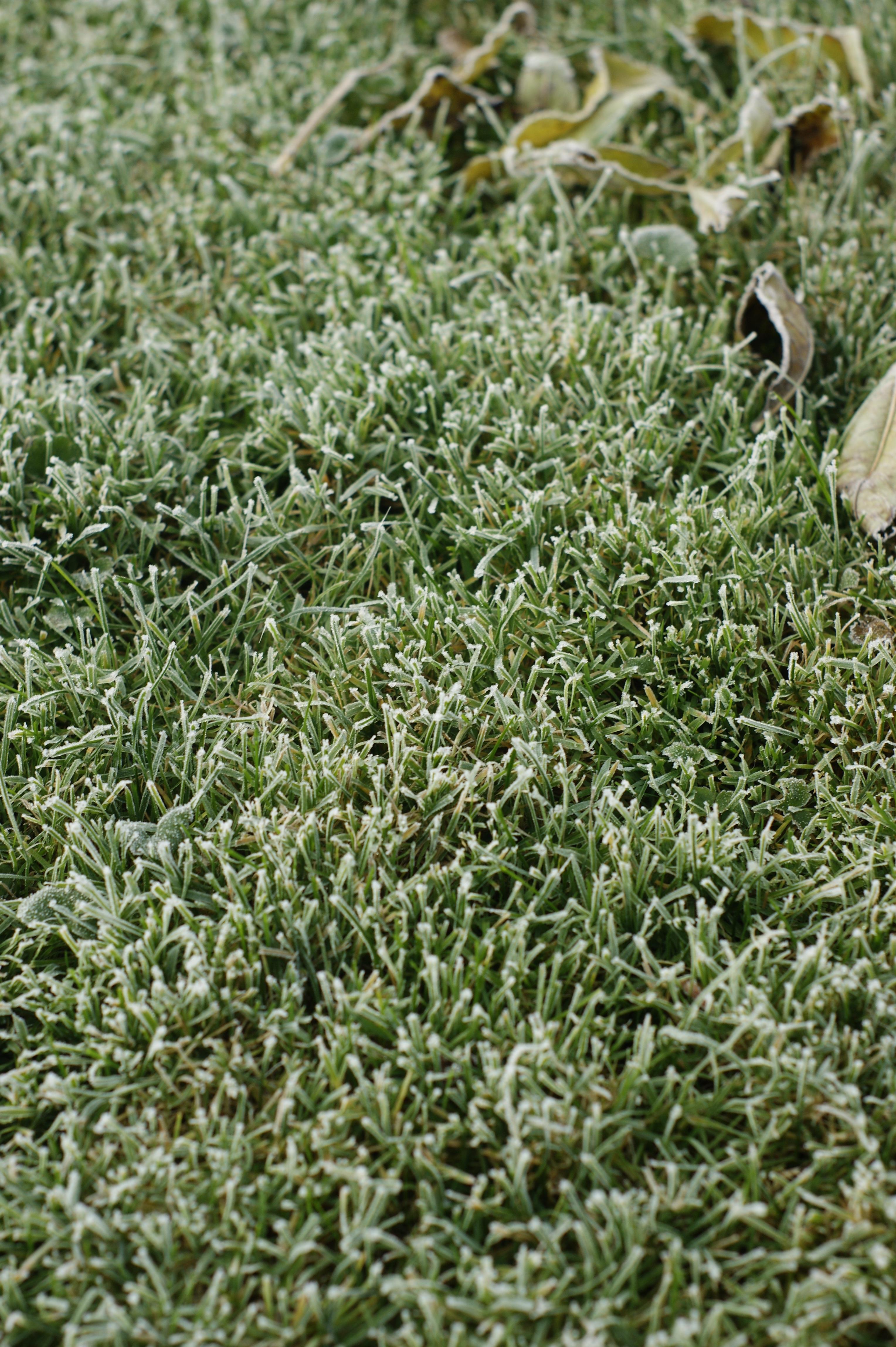 gazon artificiel hiver