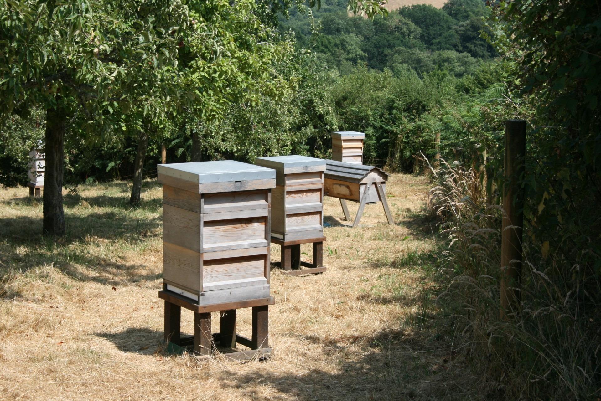 Fotos Gratis C Sped Campo Huerta Verano Insecto Patio  # Muebles La Huerta