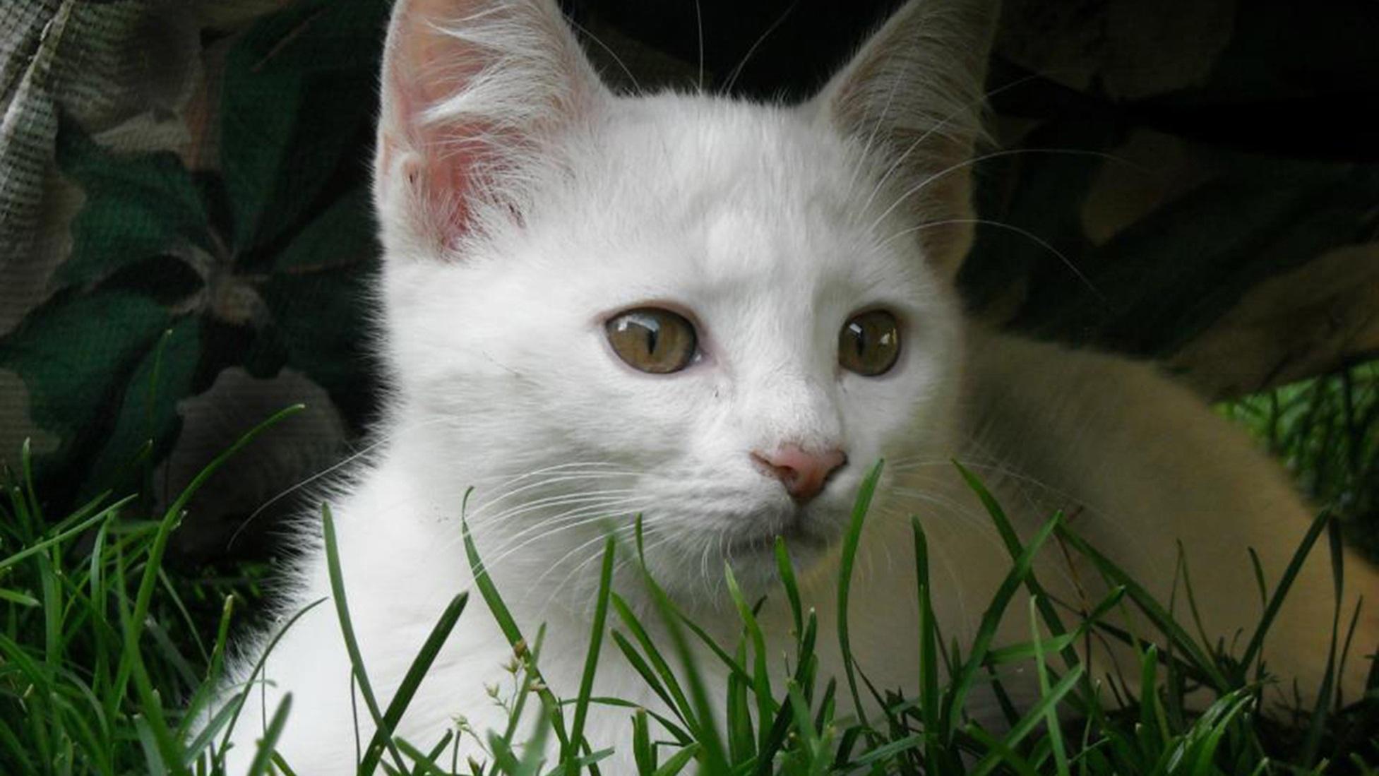 картинки белых котиков котят