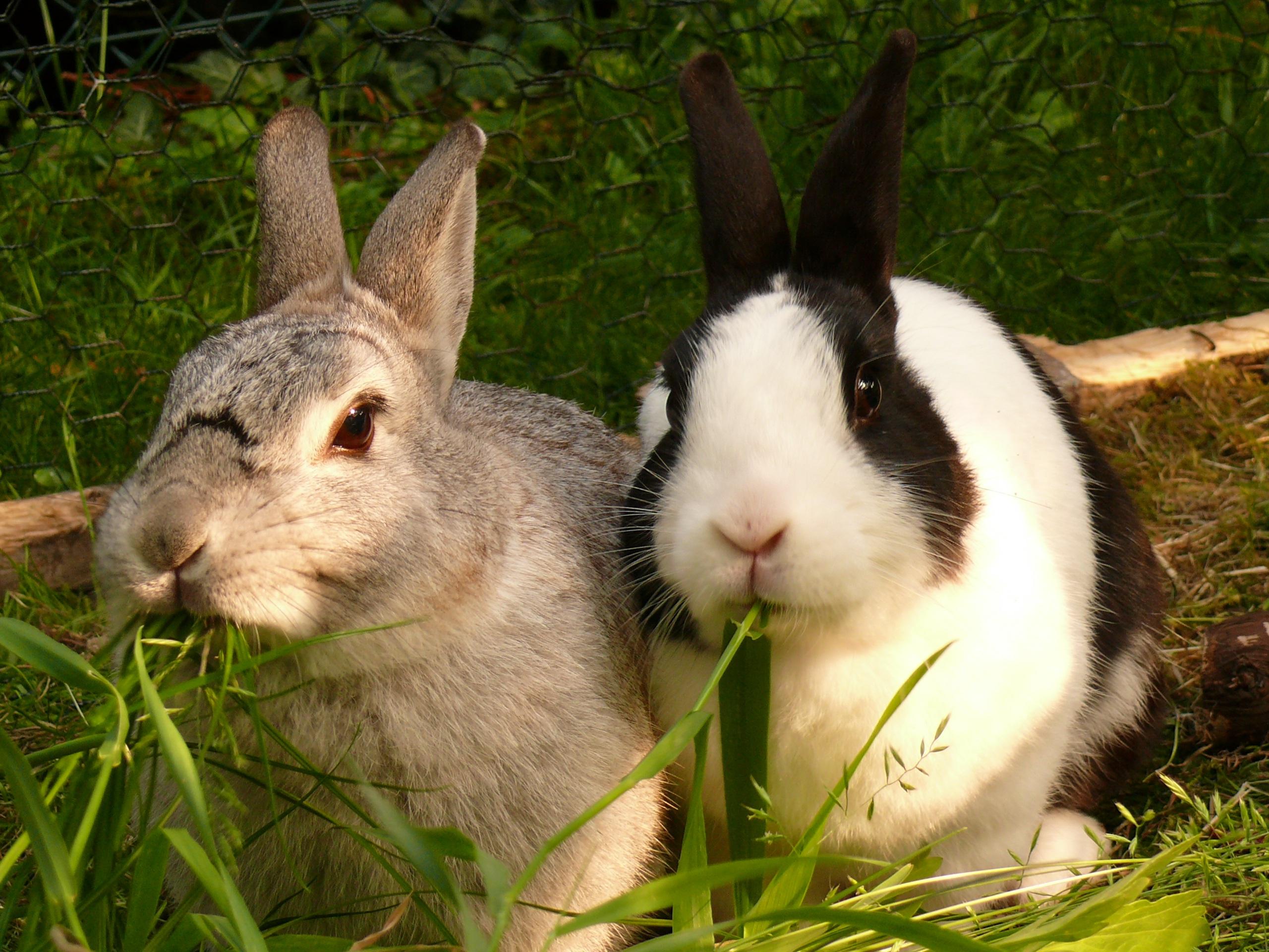 Кролик и крольчиха картинки