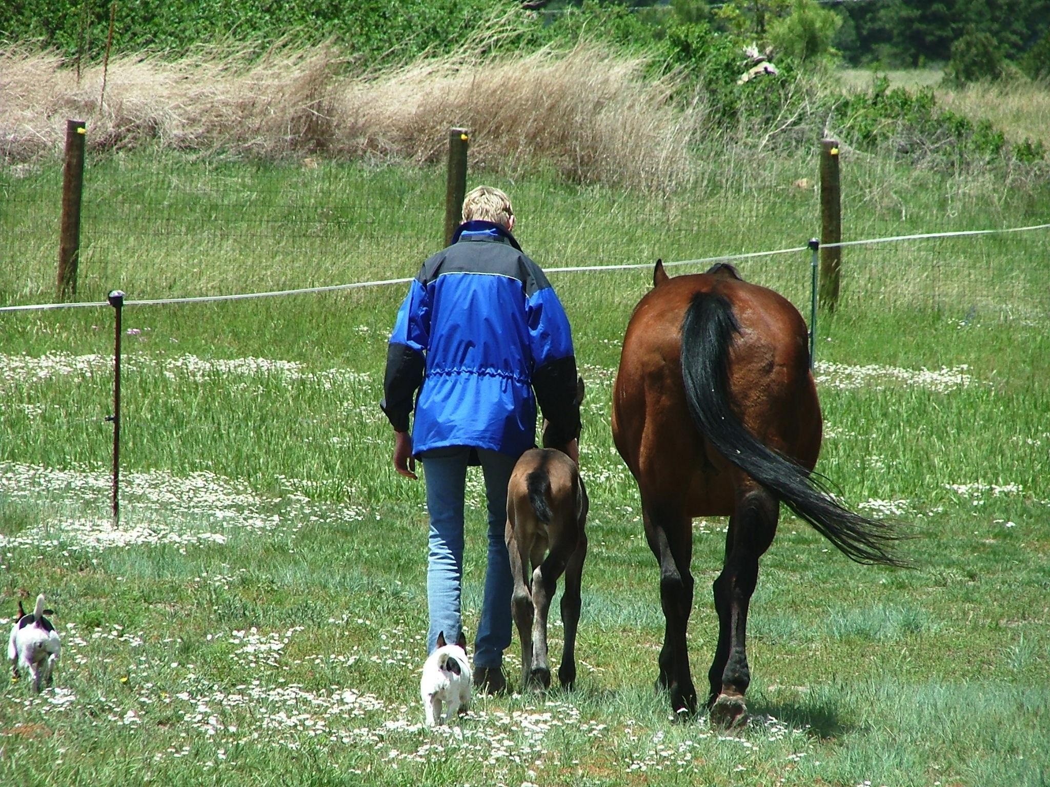 Afbeeldingen Paarden Verjaardag