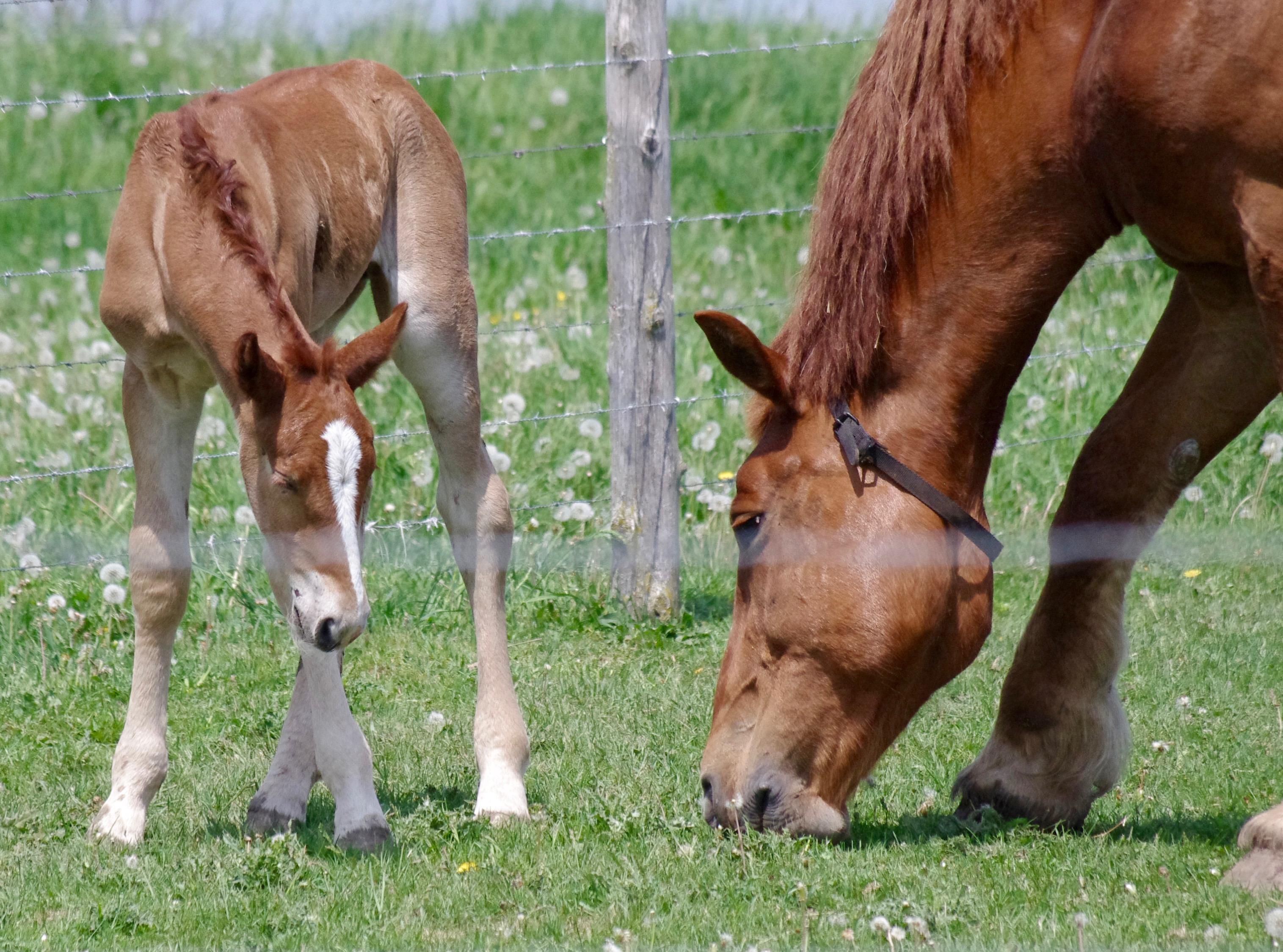 Kostenlose foto : Gras, Feld, Bauernhof, Wiese, Landschaft ...