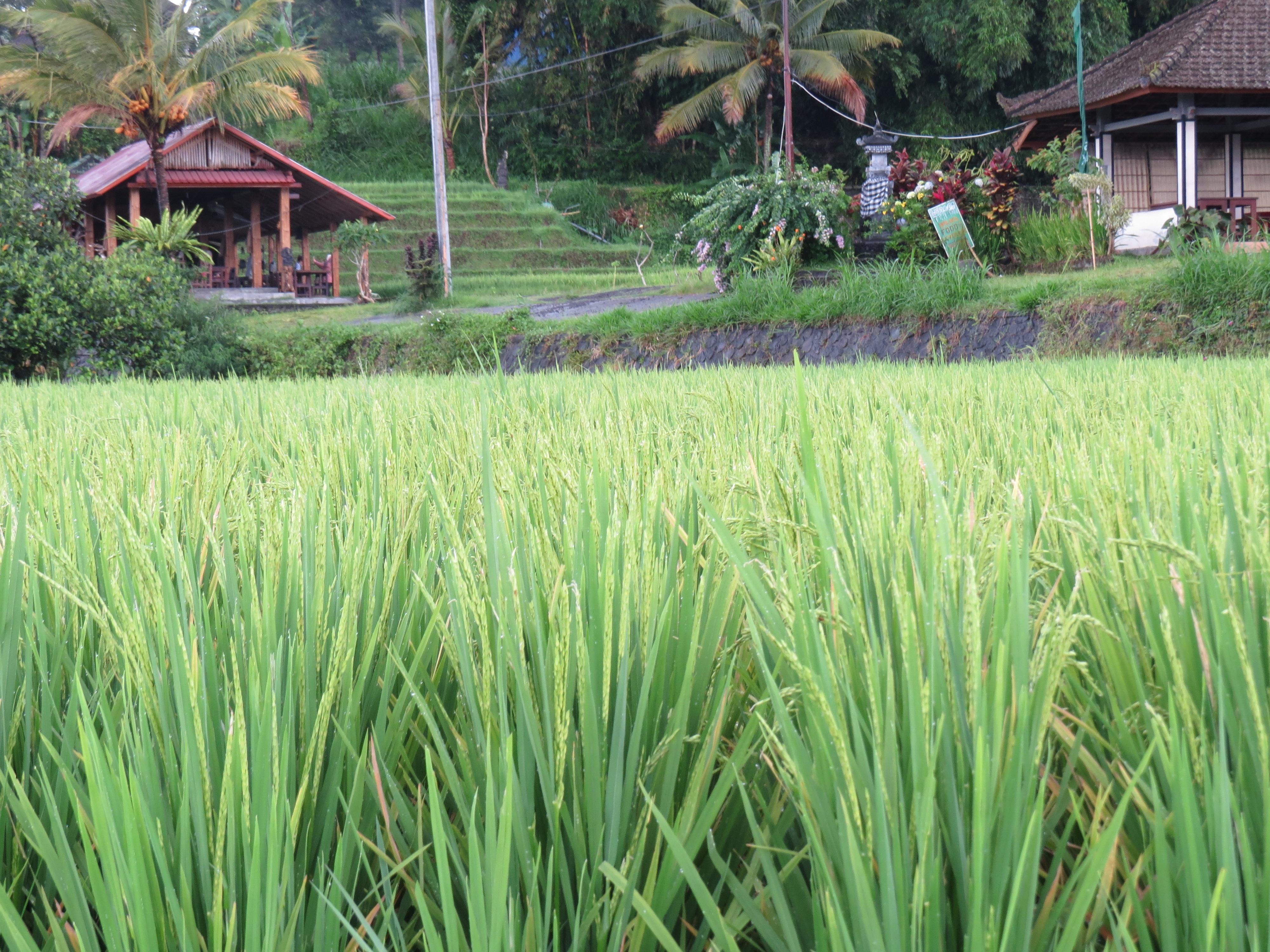 Gambar Bidang Halaman Rumput Tanaman Pertanian Perkebunan