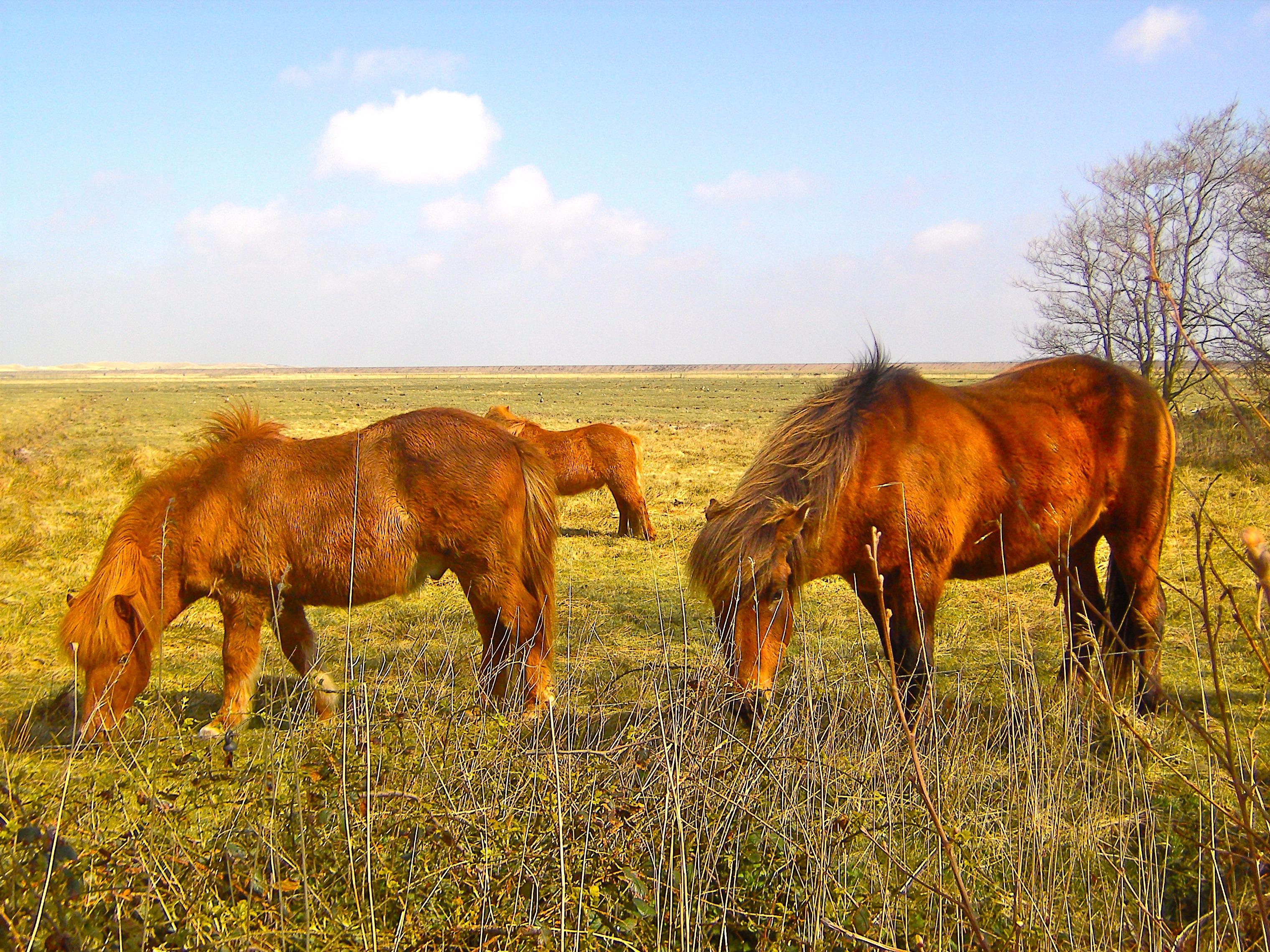 fotos gratis c233sped campo prado pradera animal