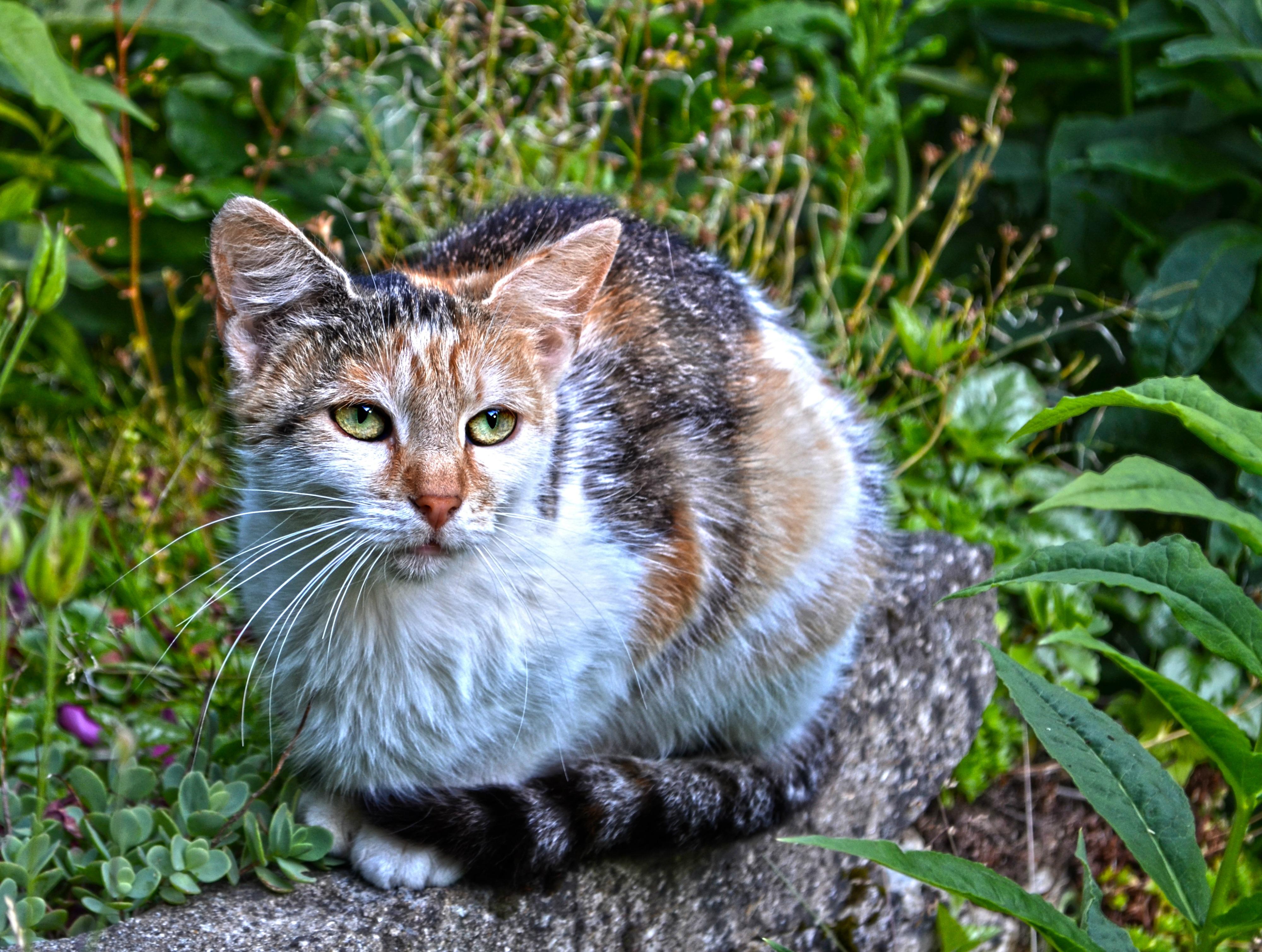 Color cats like - Grass Flower Animal Stone Wildlife Kitten Cat Color Mammal Fauna Whiskers Vertebrate European Shorthair Wild Cat