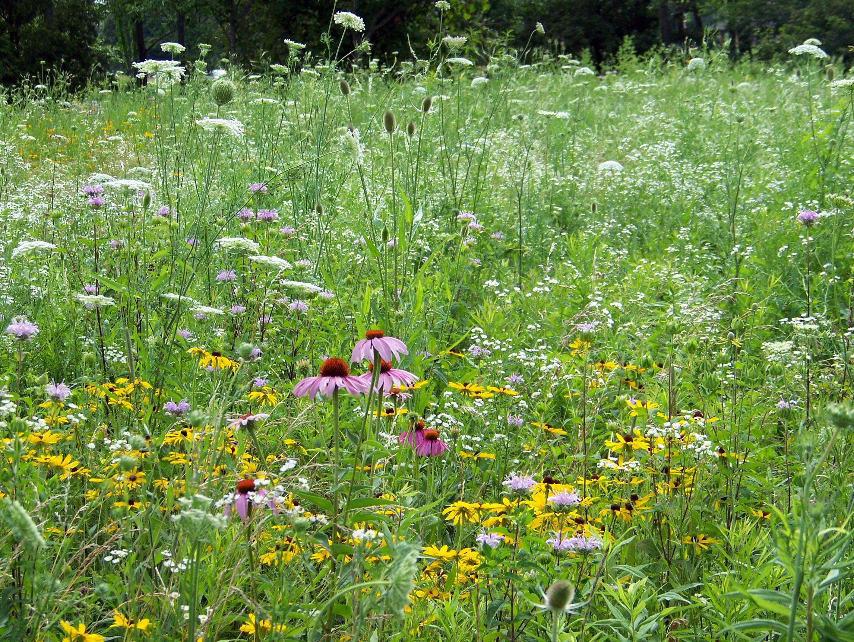 теплых трава на лугу названия картинки система человека получает
