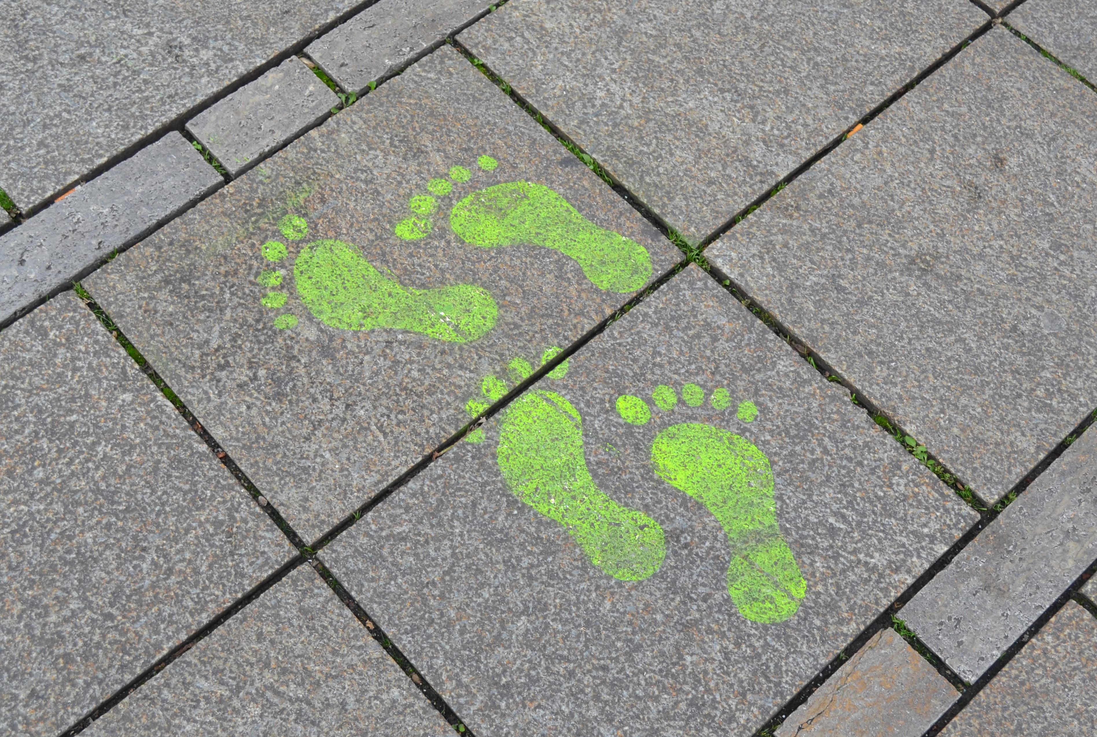 Grass Lawn Leaf Sidewalk Floor Footprint Cobblestone Wall Steps Asphalt Walkway Line Green Soil Lane Circle Street Art Flooring Road Surface Outdoor Structure on Art Steps