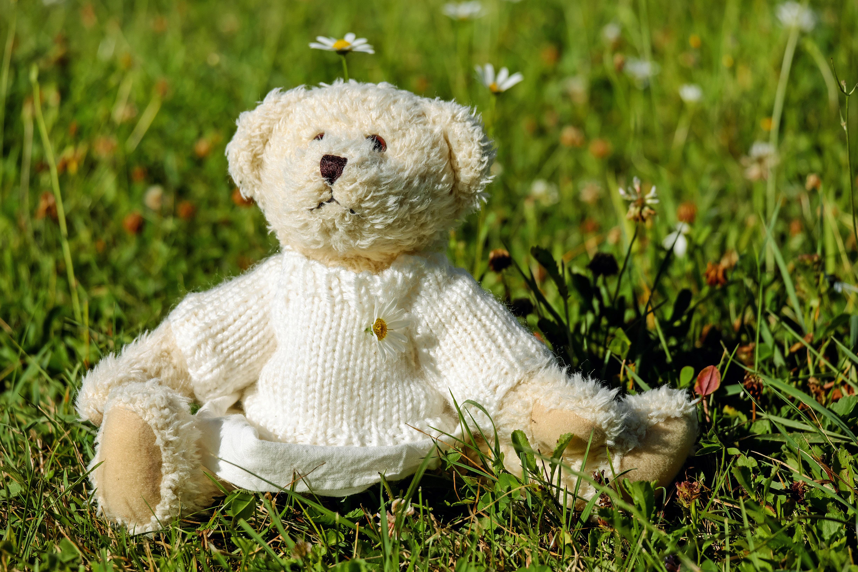 Cỏ Bãi Cỏ Đồng Cỏ Hoa Dễ Thương Đồ Chơi Gấu Bông Gấu Sang Trọng Teddy