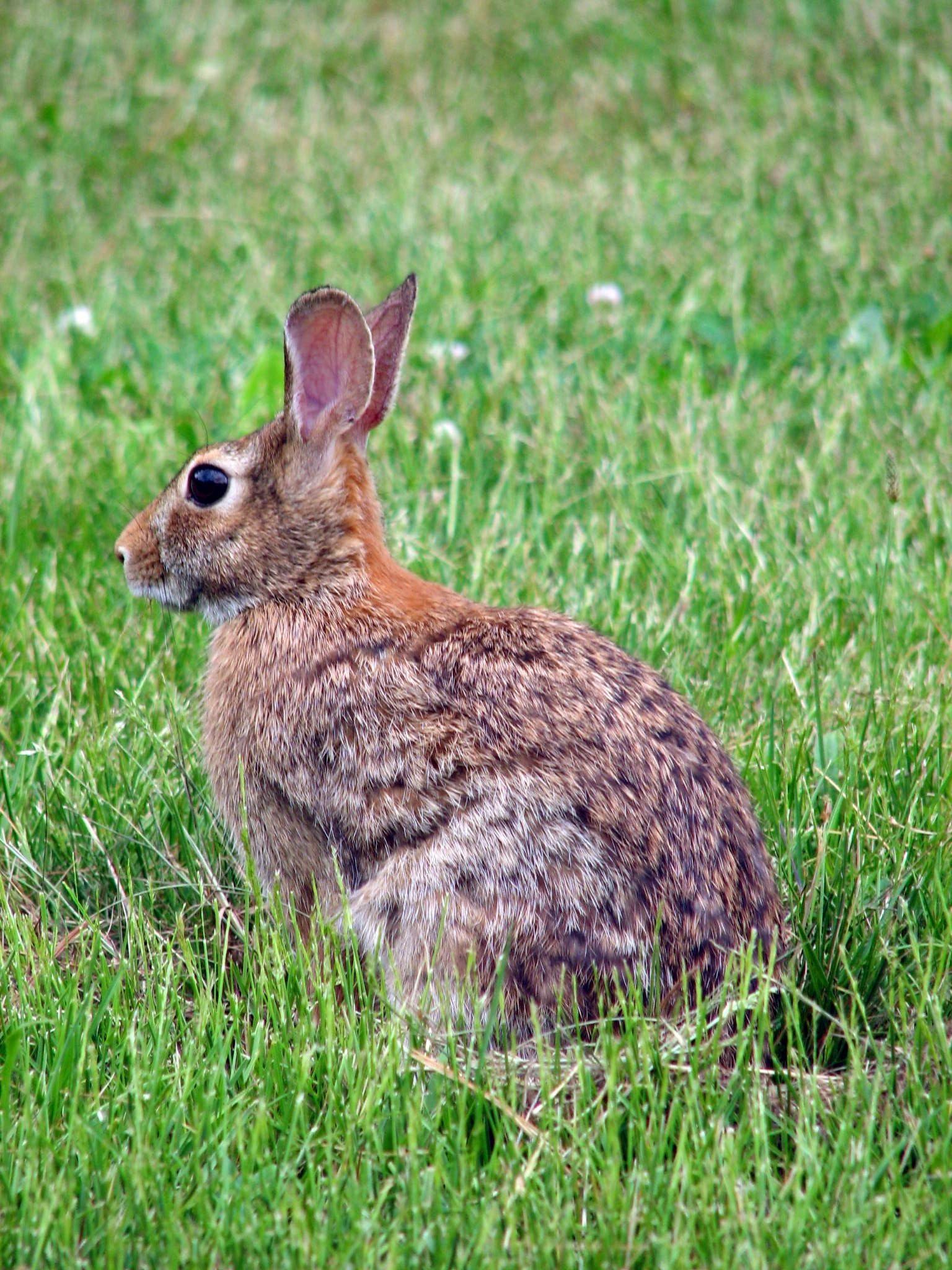 conejos chatrooms Juegos de pascua: ¡busca huevos de colores, celebra con el conejo de pascua,  y lanza huevos en uno de nuestros muchos juegos de pascua gratis, en línea.