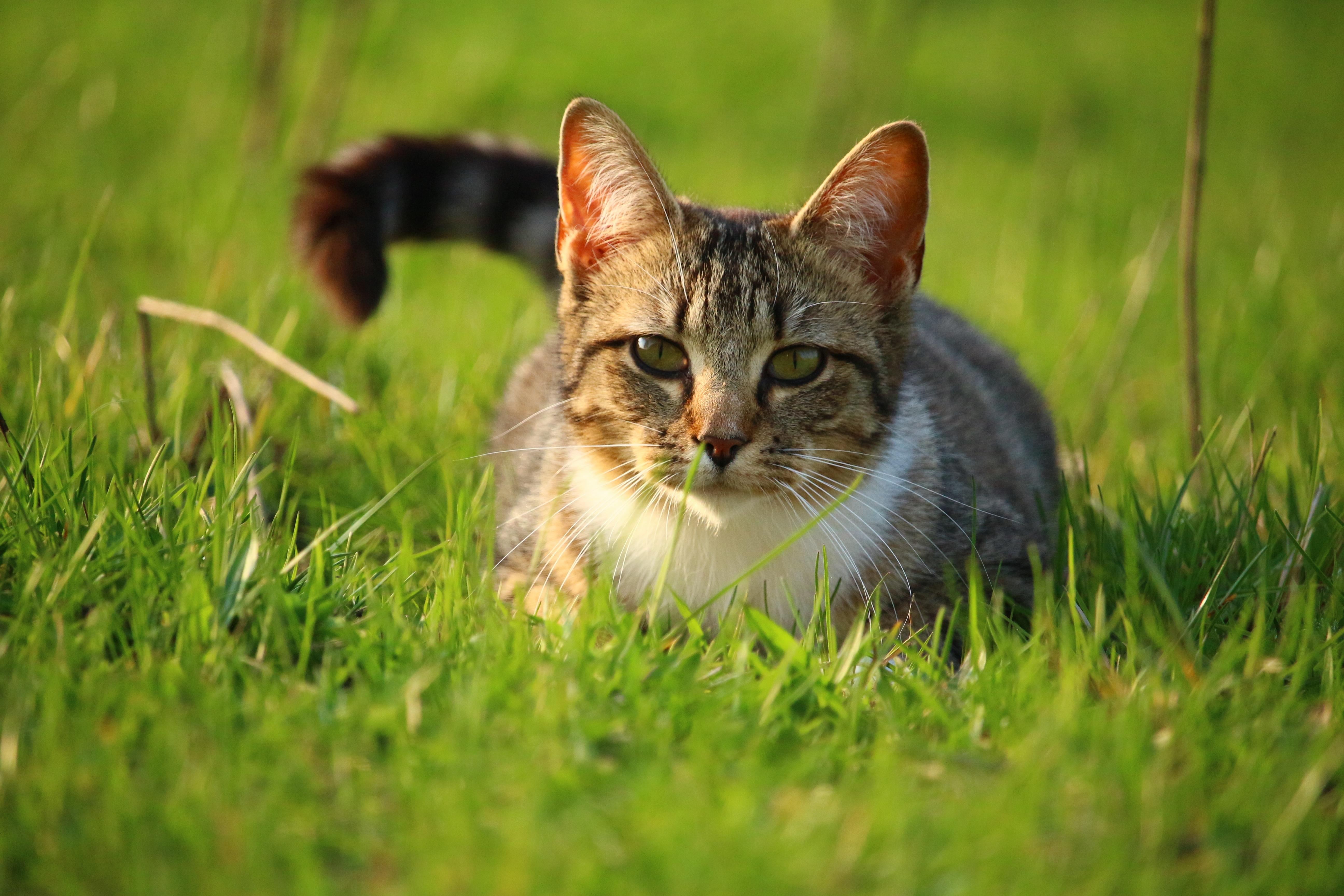 ломала фото домашних котов на природе компактное устное выступление