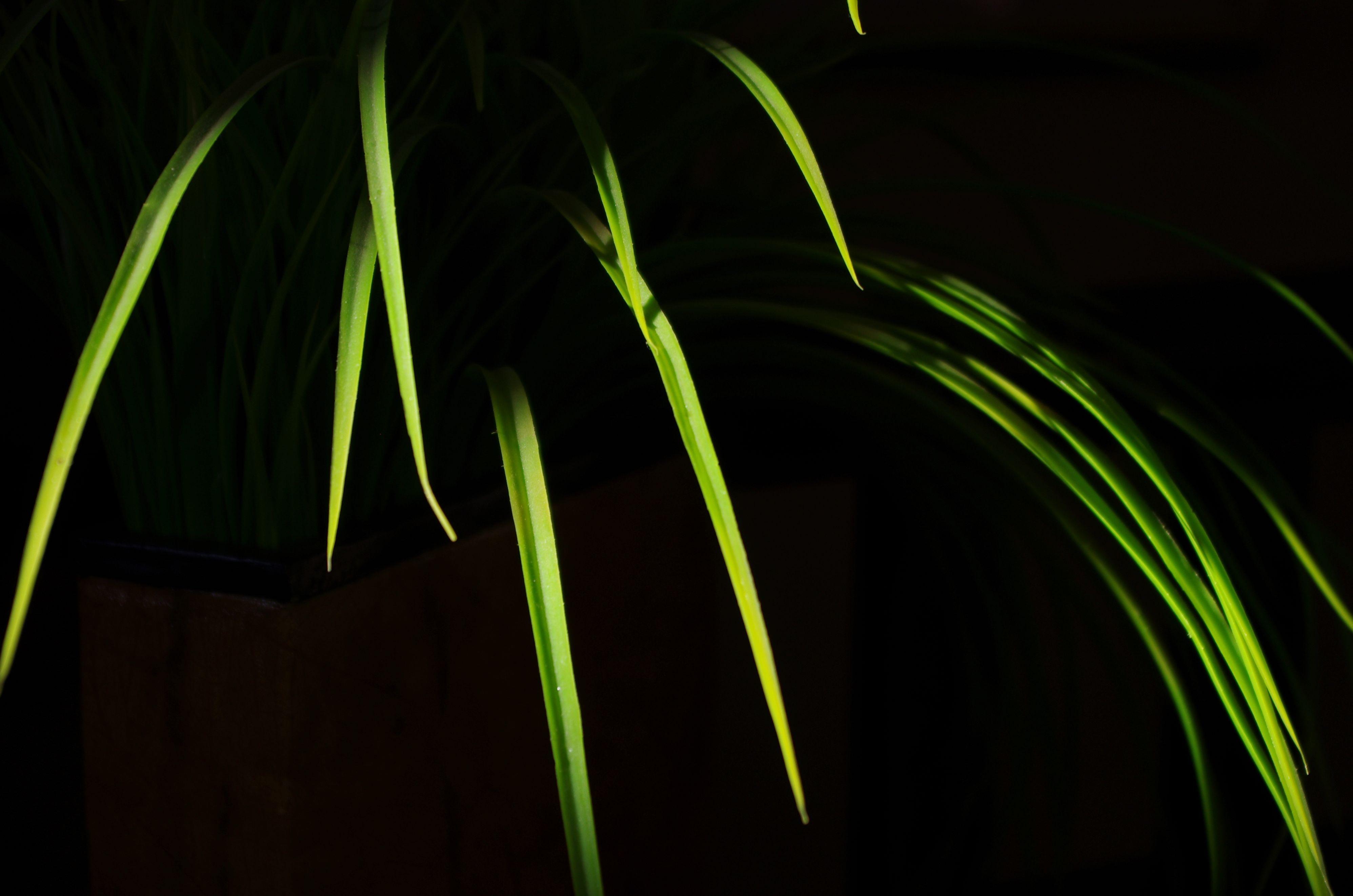 free images grass light night sunlight leaf flower line