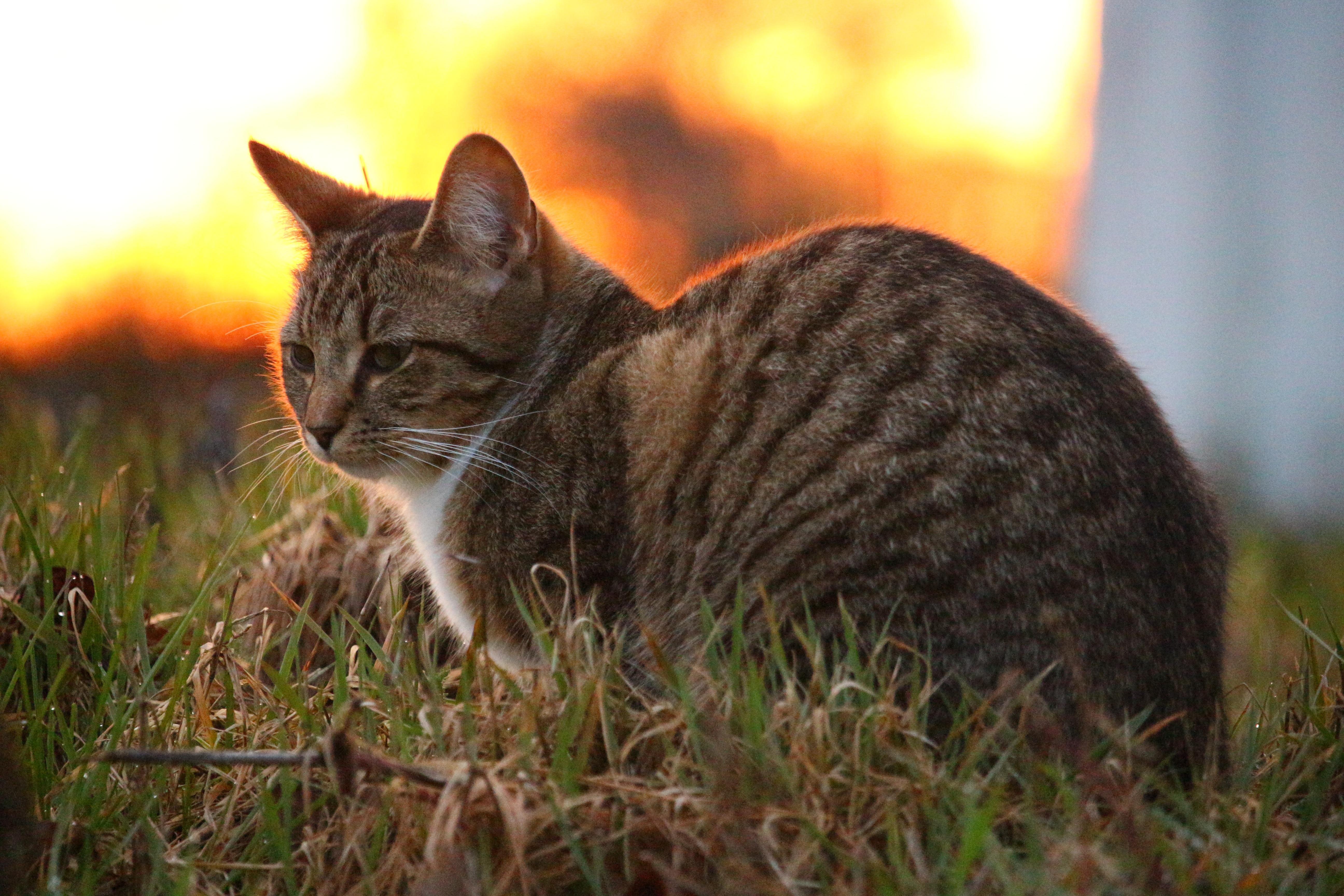 feral kitten purring