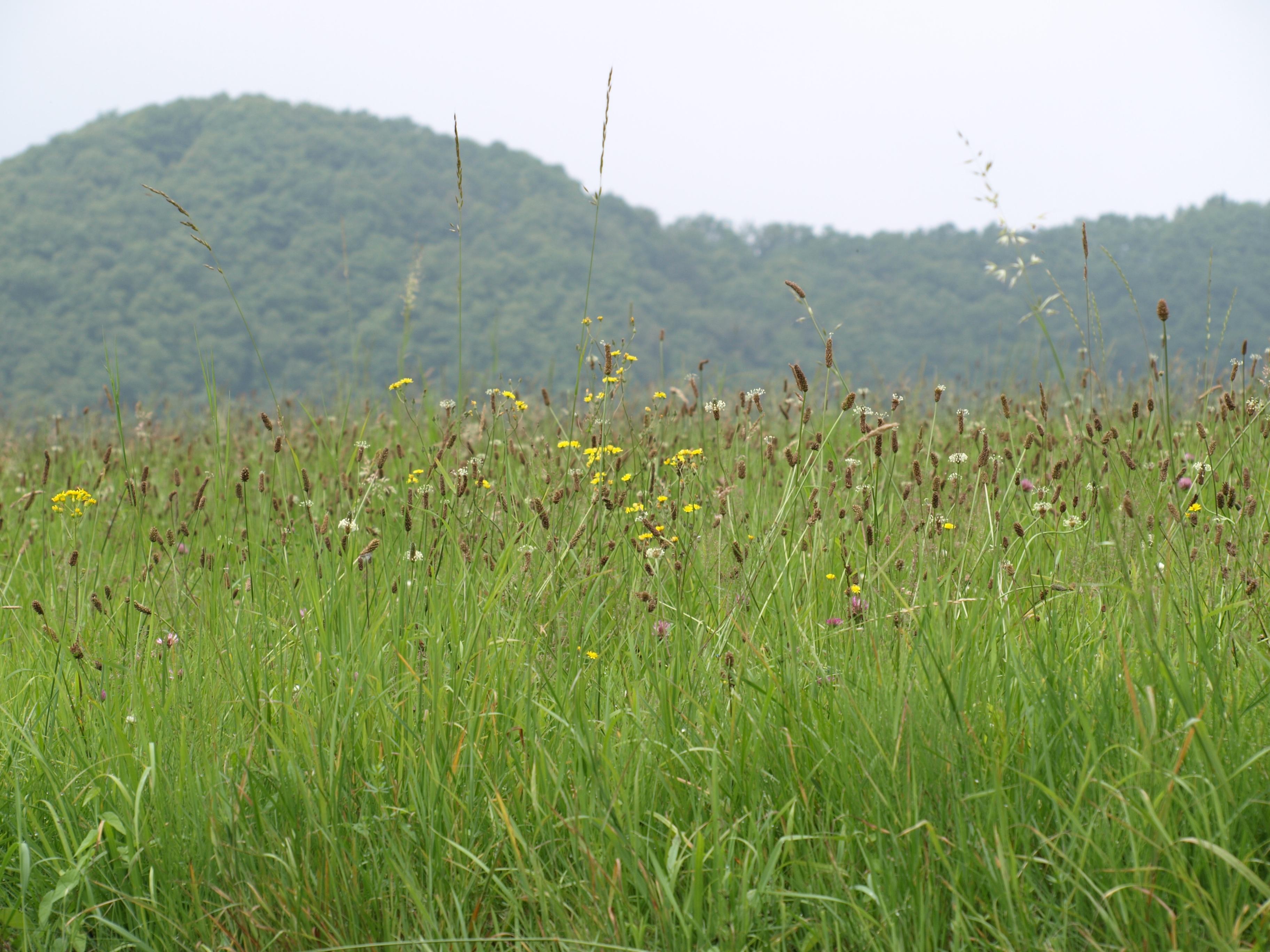 images gratuites herbe le marais montagne plante champ pelouse prairie fleur surgir. Black Bedroom Furniture Sets. Home Design Ideas
