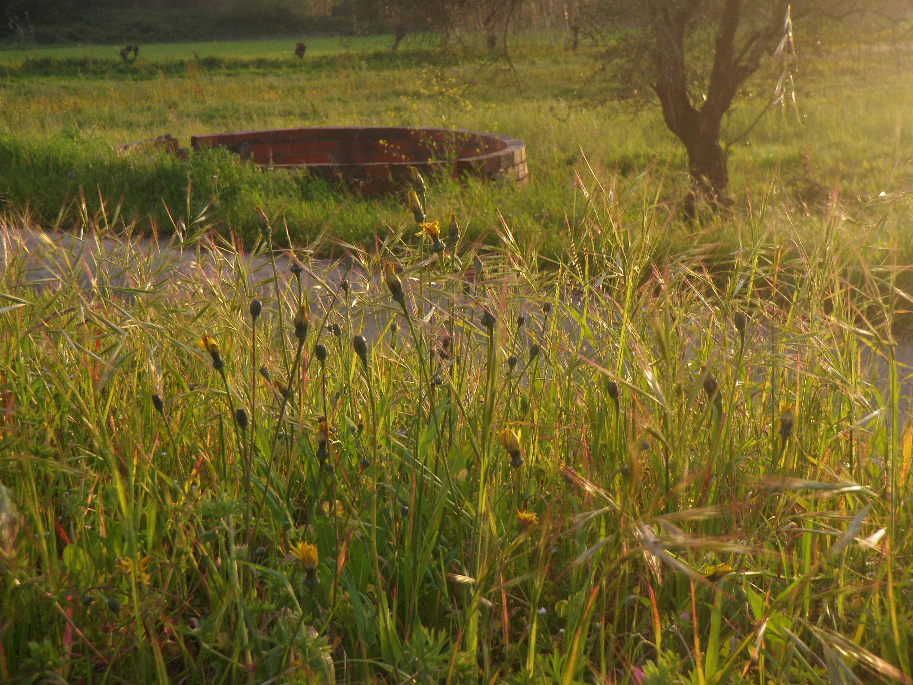 Картинки луг болото