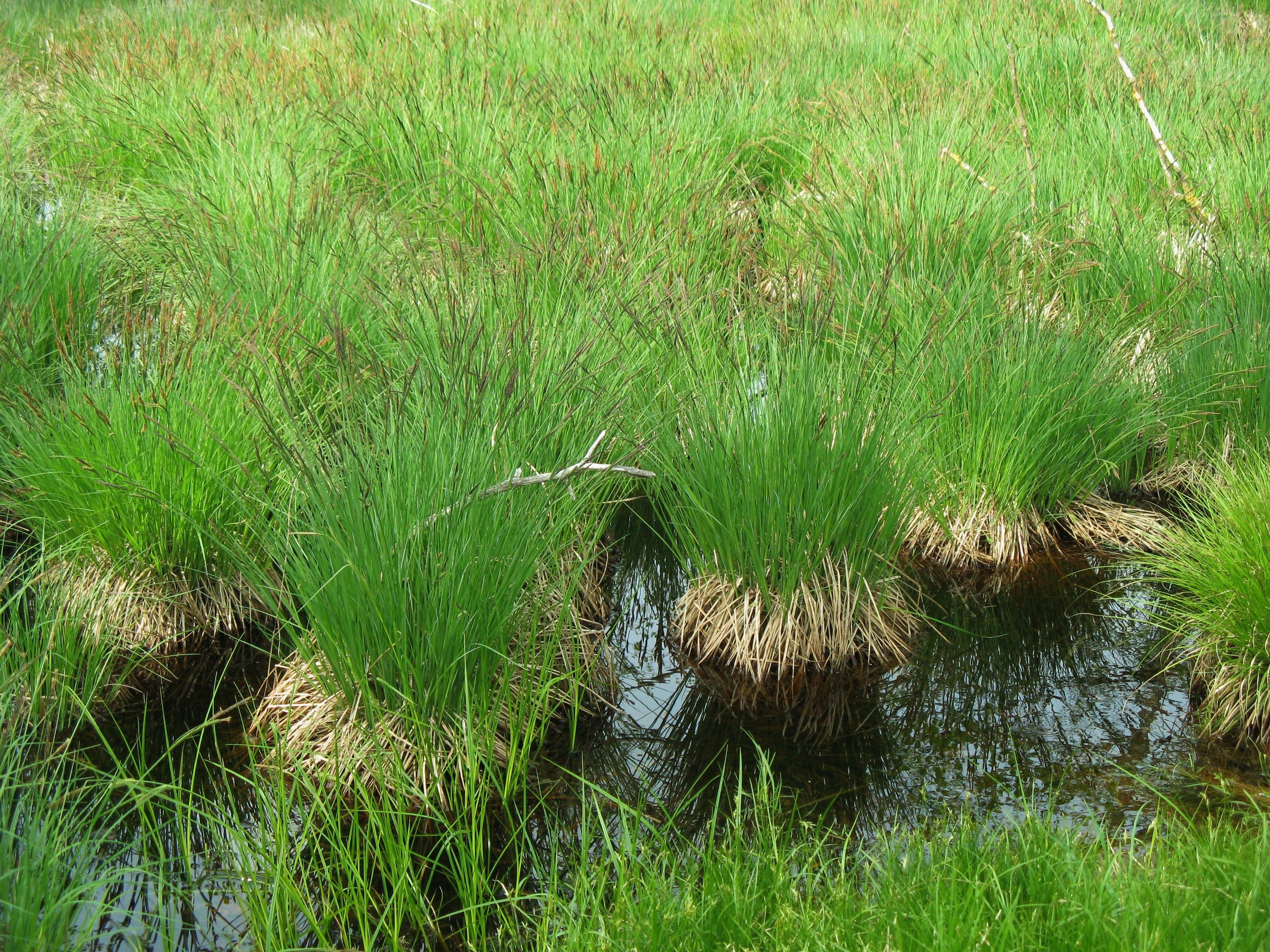 всех болотная растительность фото особенность этого