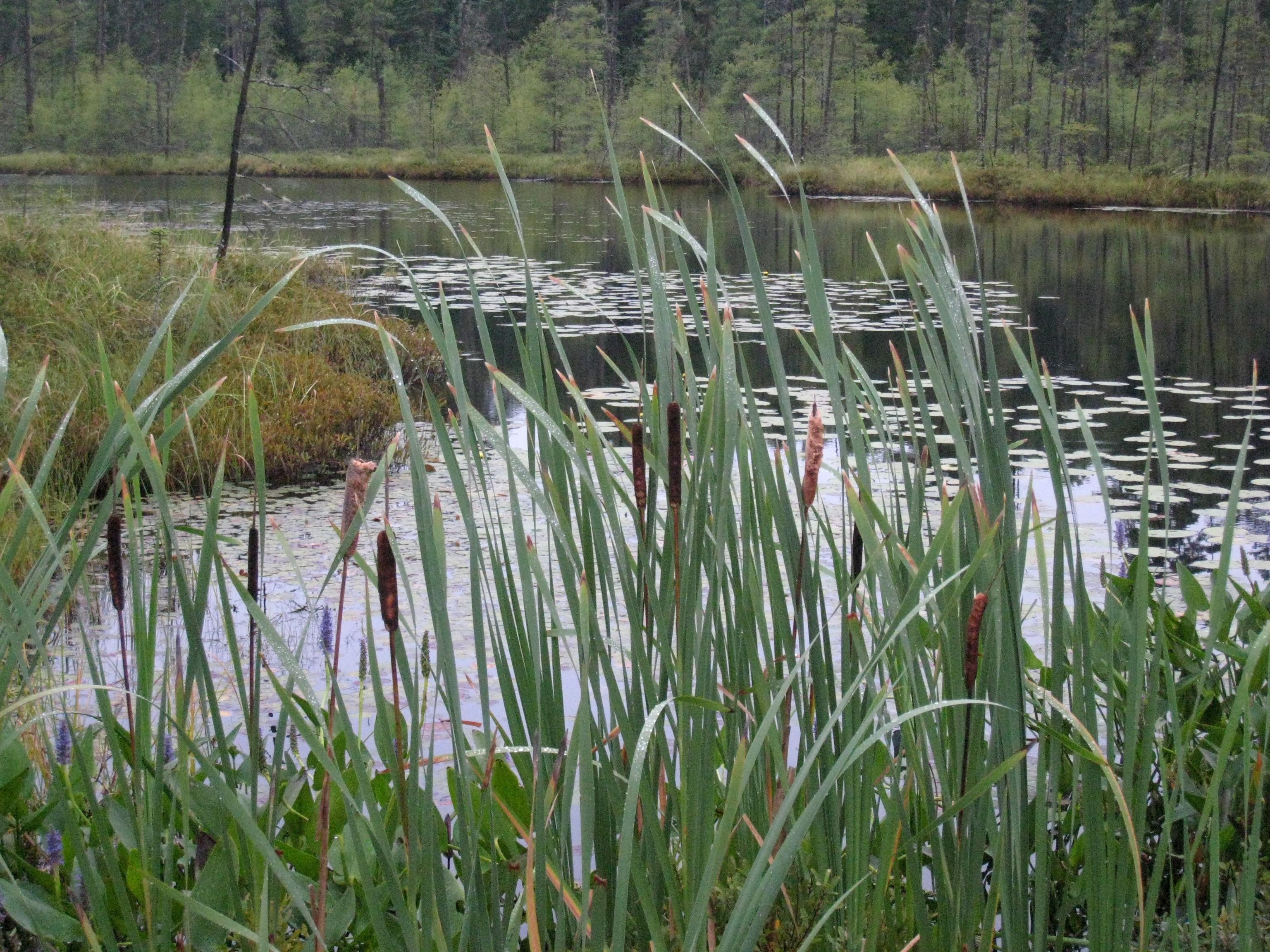 одно болотная растительность фото вот белье, все