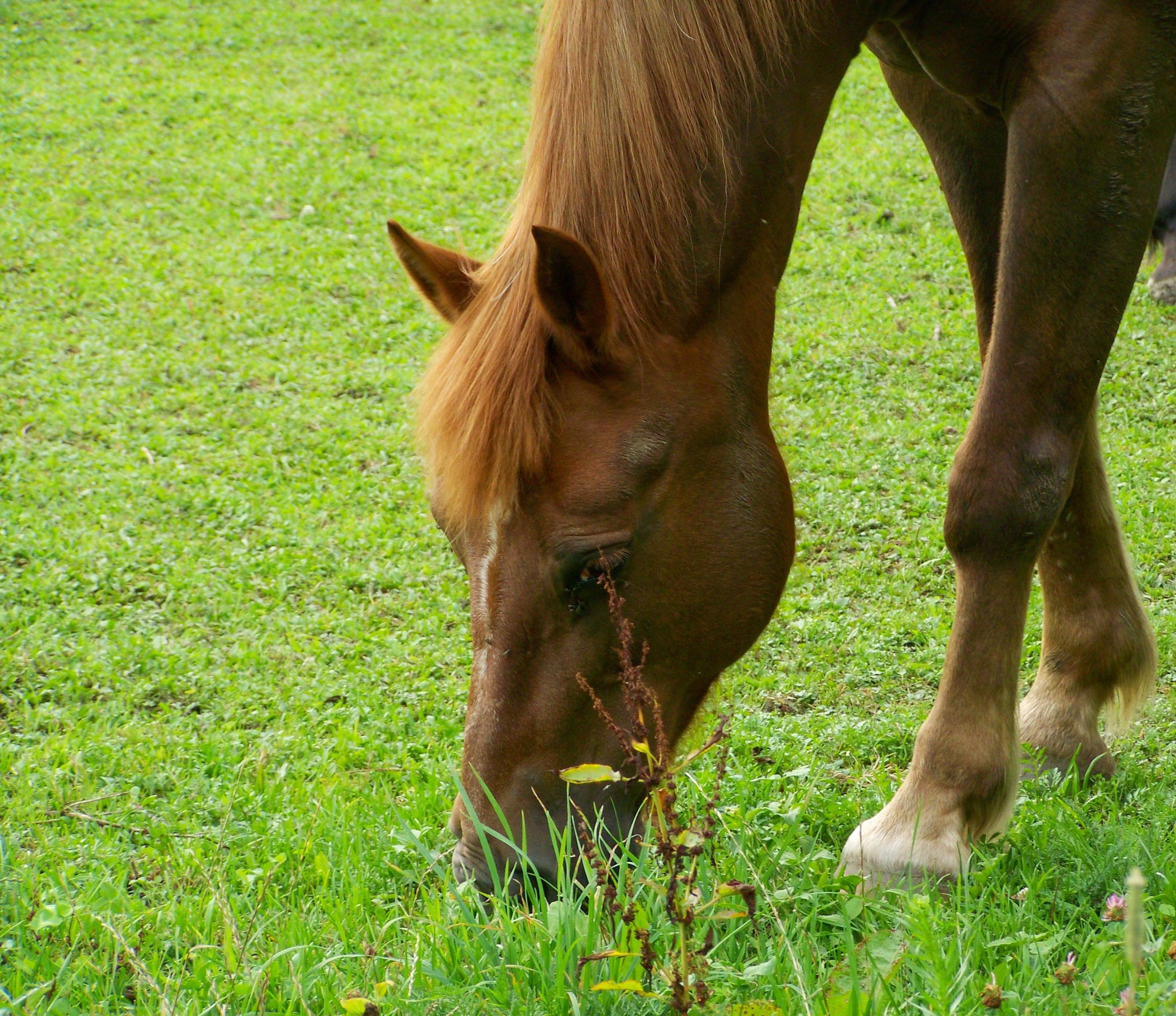 97+ Gambar Kuda Hewan Peliharaan Gratis