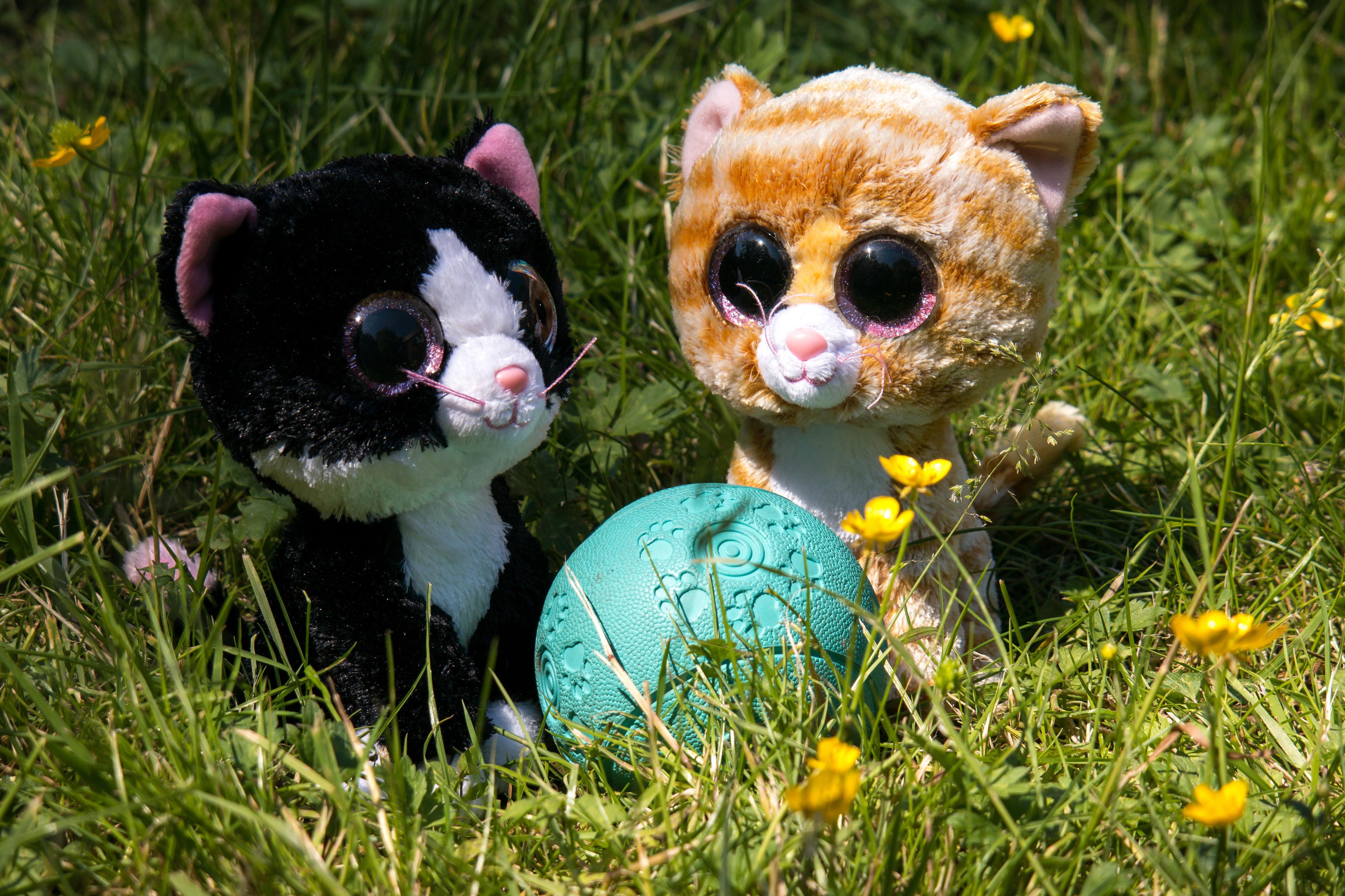 hình ảnh : đồng cỏ, hoa, cún yêu, dễ thương, Mèo con, con mèo, Động vật có vú, Đồ chơi, gấu bông, trái bóng, mềm mại, Vội vã, thú nhồi bông, ...