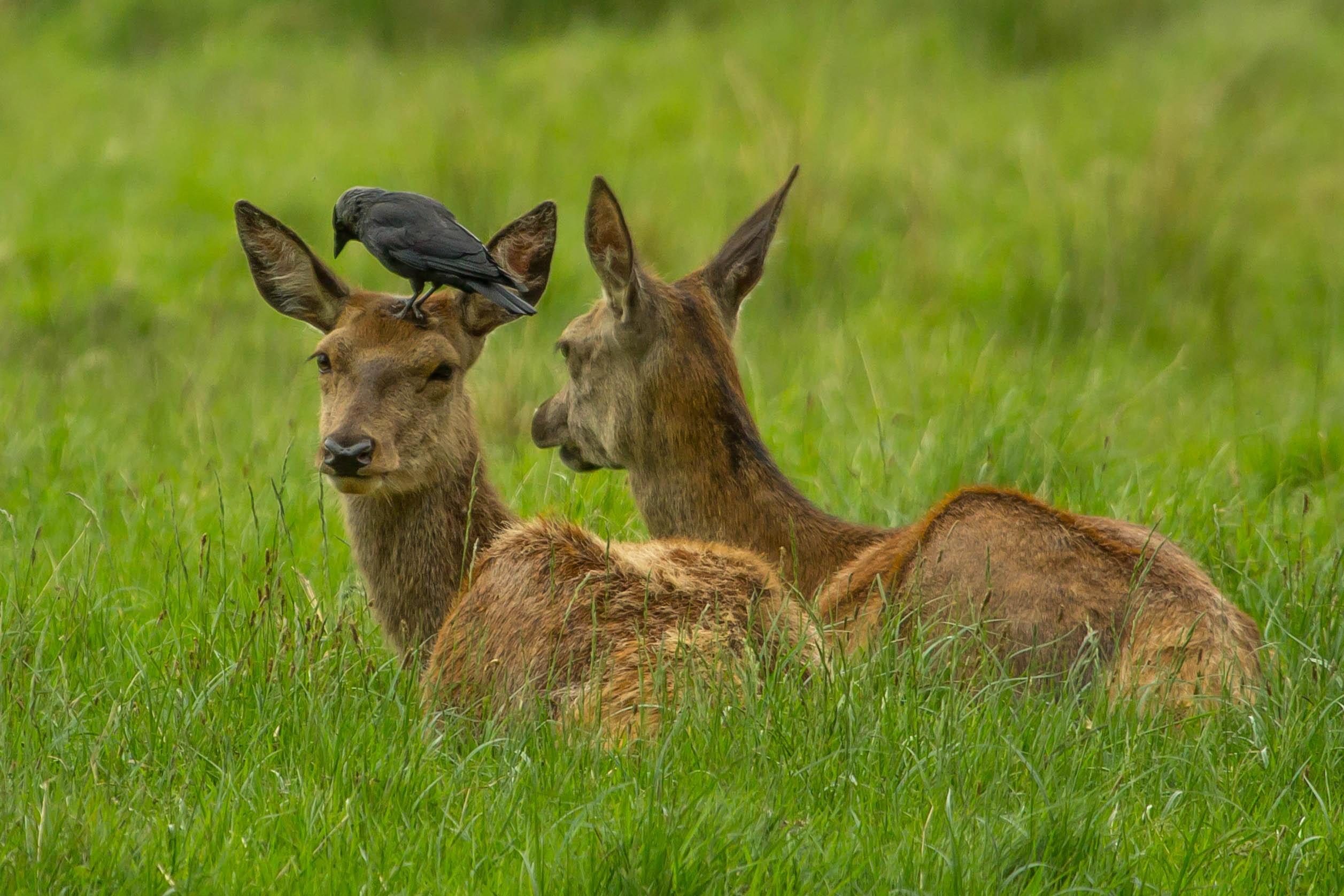 последнее картинки животных белгородской области менее интересные предки