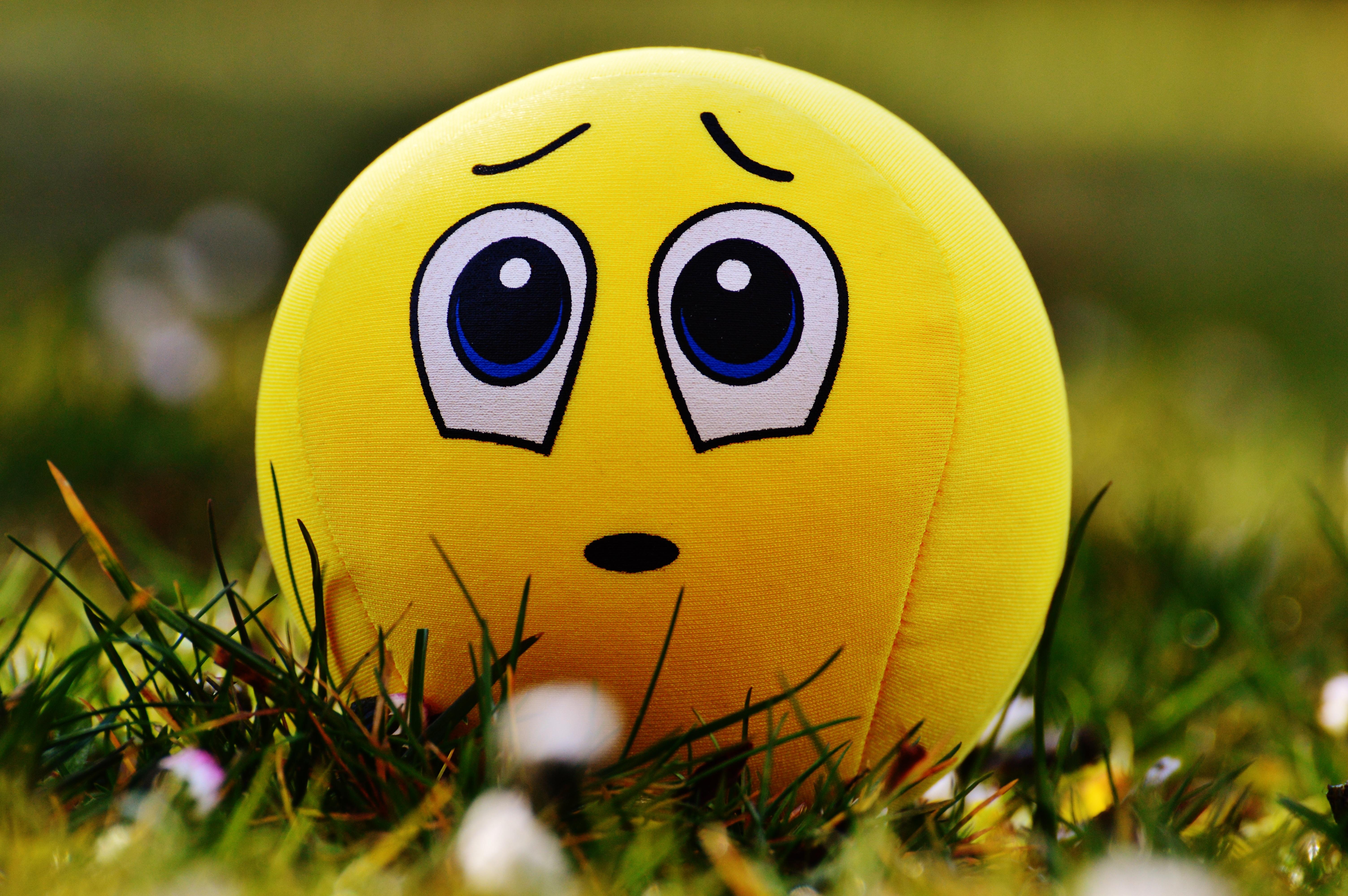 Gambar Padang Rumput Manis Bunga Imut Musim Semi Hijau