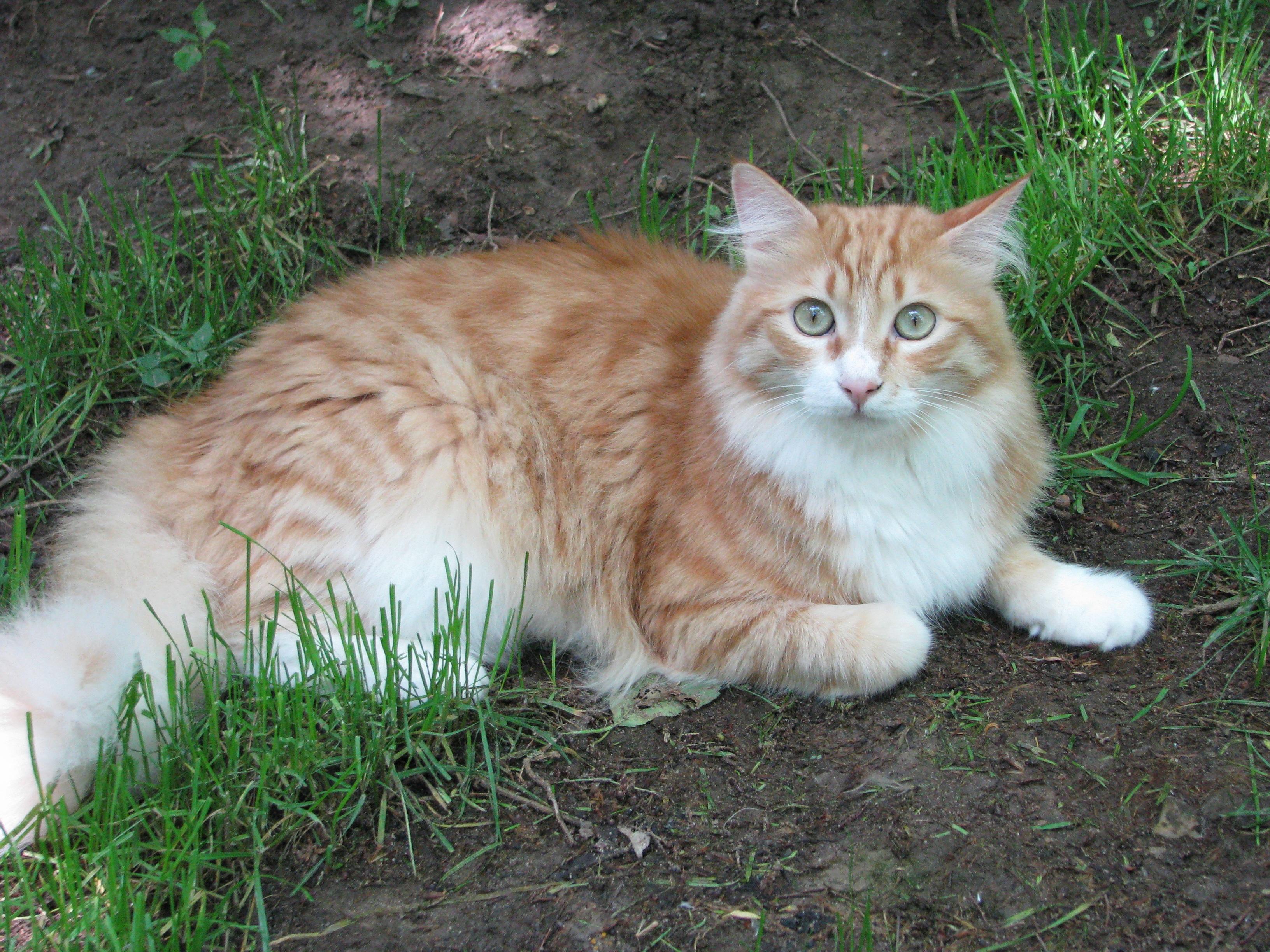 Fotos gratis c sped mascota pelaje verde relajarse for Ahuyentar gatos del jardin