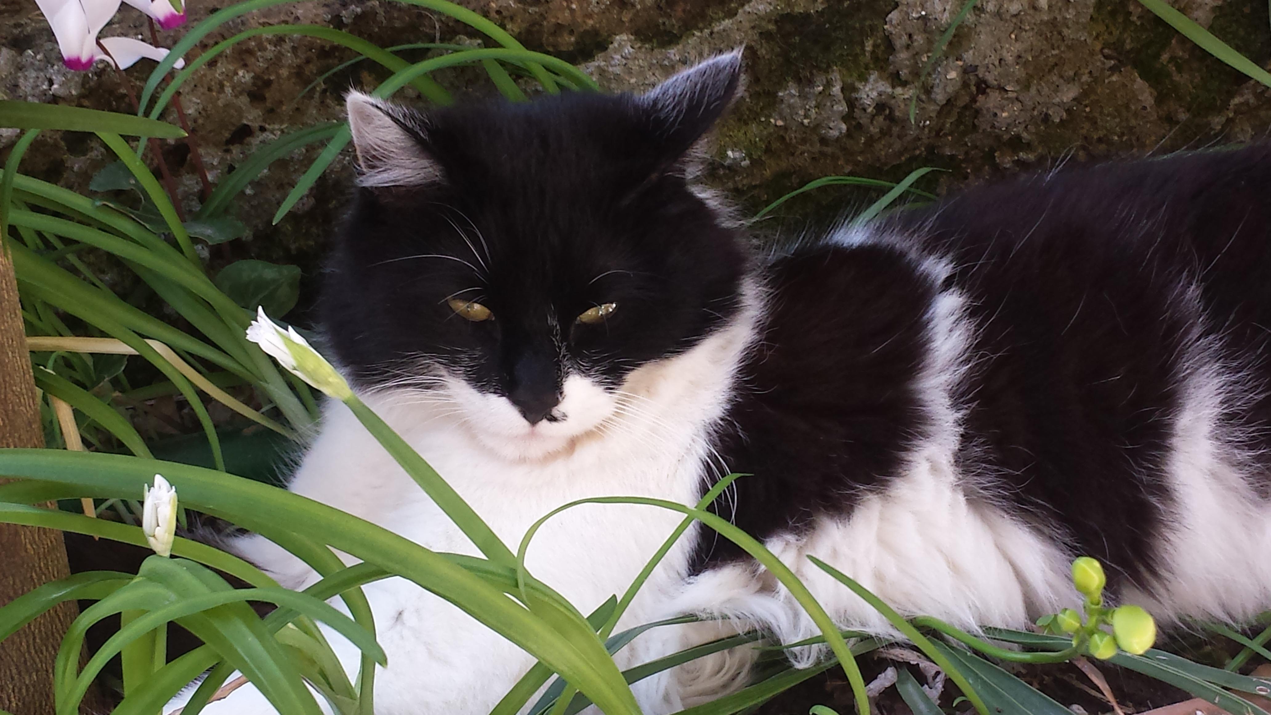 Vues: 53882. Mec noir se faisant une salope par la chatte sur la terrasse.