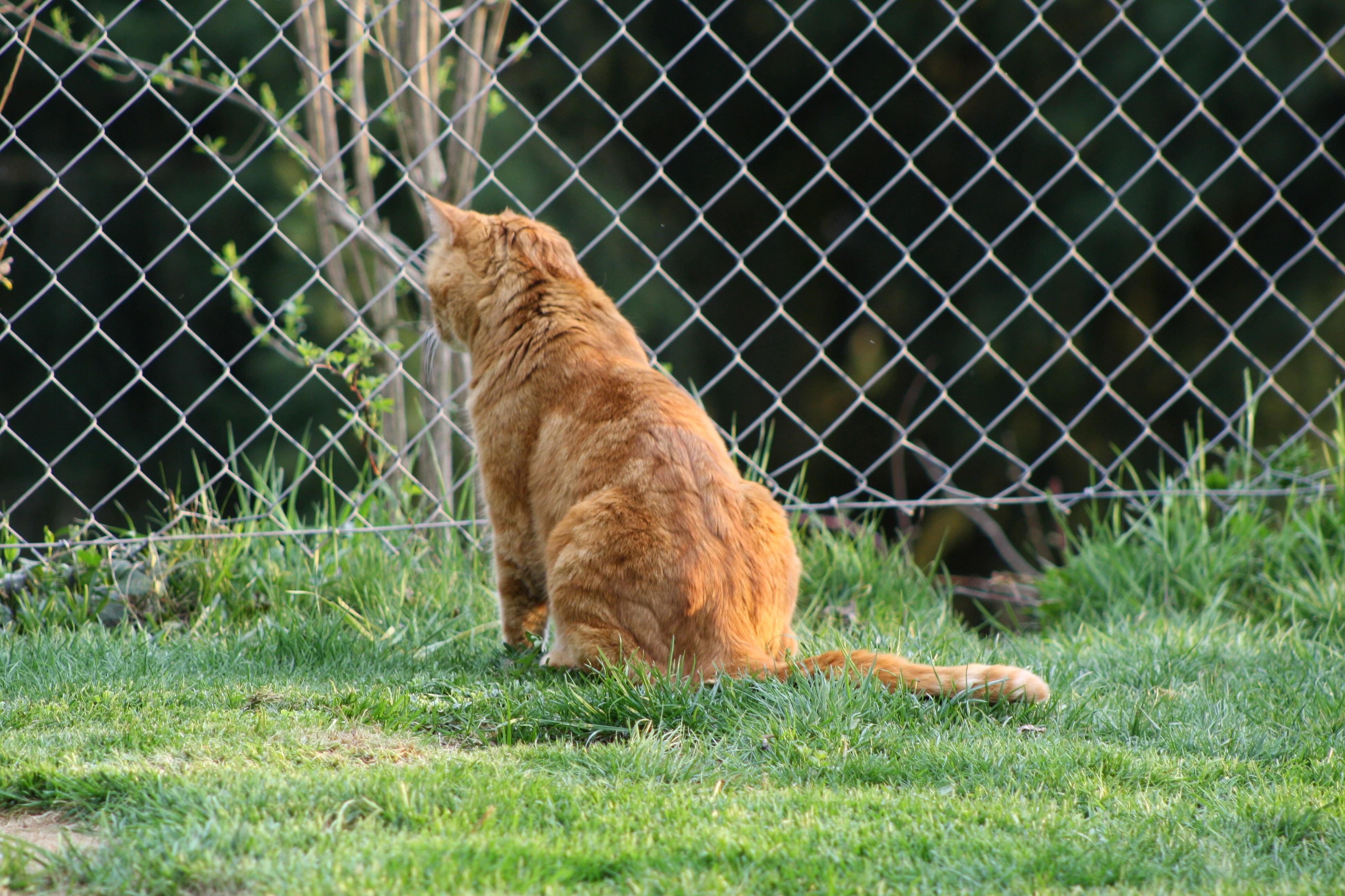 Recinzione Giardino Per Gatti.Immagini Belle Erba Animale Domestico Primavera Fauna Sedersi