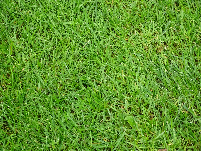 Images Gratuites : herbe, plante, champ, sol, pelouse, Prairie