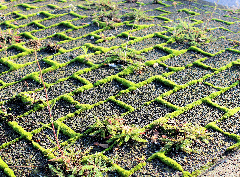 Fotos gratis : césped, planta, suelo, acera, pavimento, descuidado ...