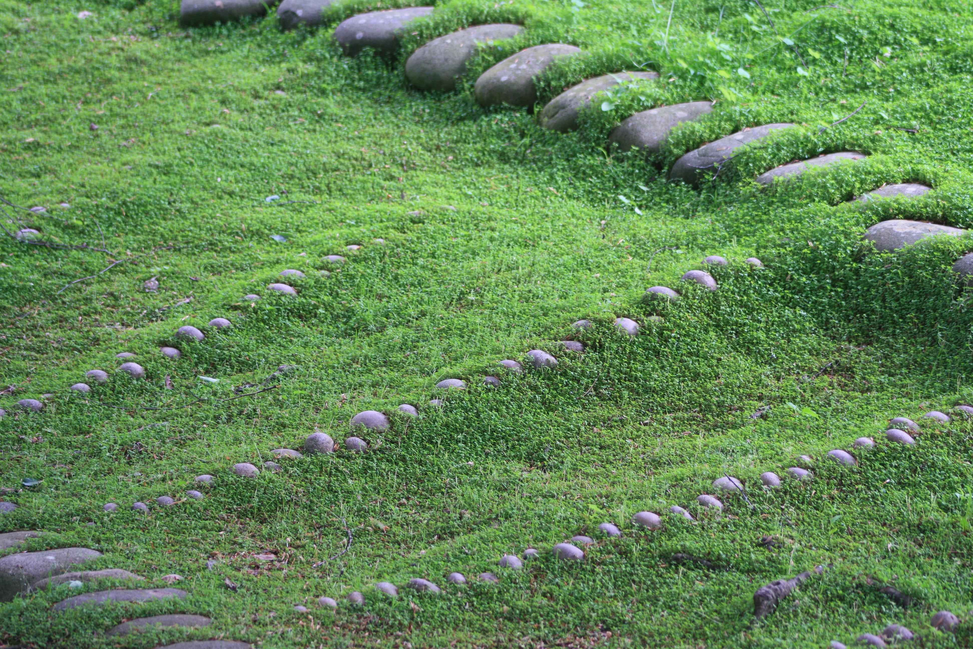 Fotos gratis c sped planta campo flor verde guijarro suelo bot nica agricultura - Cesped japones fotos ...