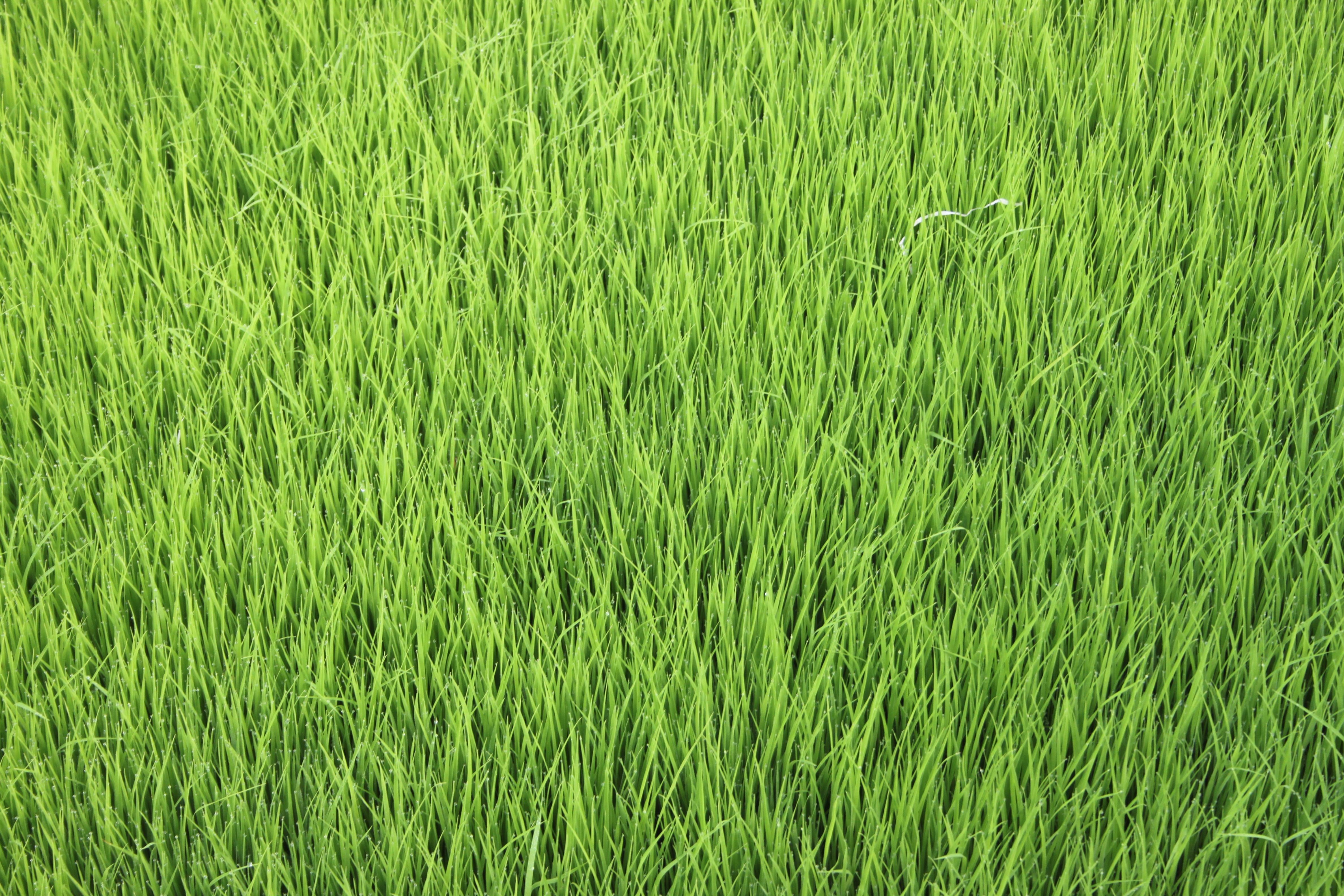 чем трава картинки большая рвет толстой