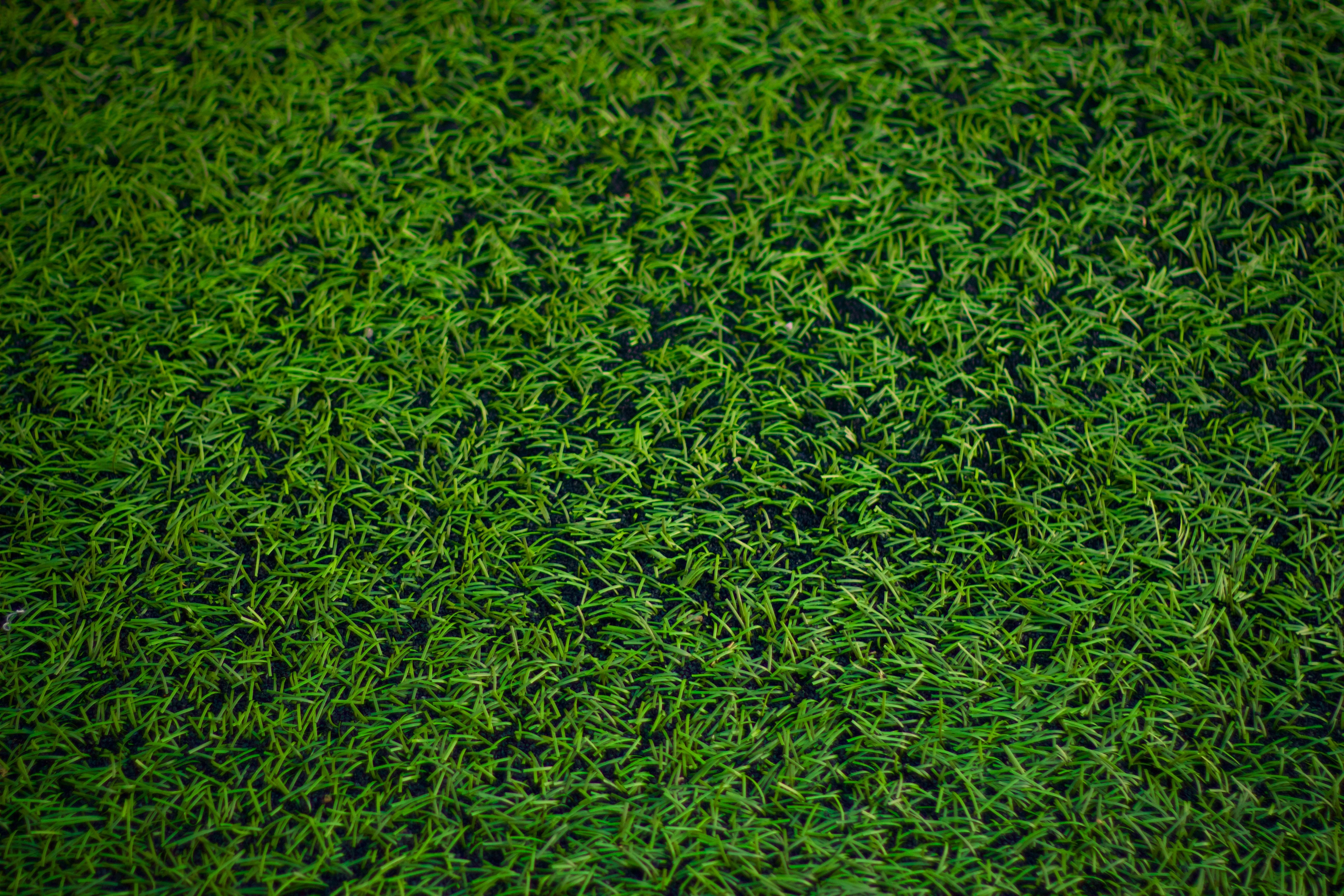 images gratuites herbe plante champ pelouse feuille. Black Bedroom Furniture Sets. Home Design Ideas