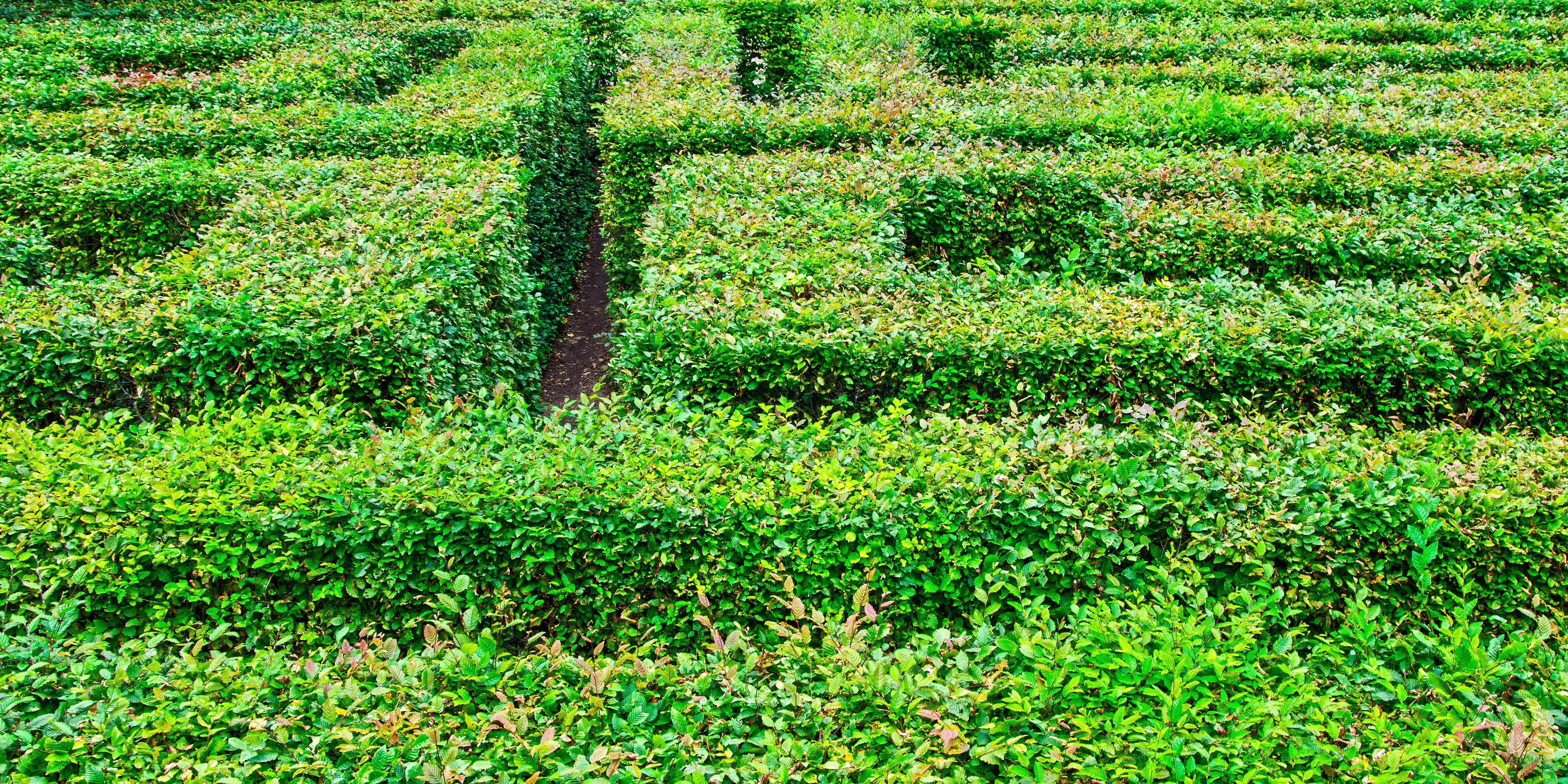 Emejing Labyrinthe Jardin Plantes Ideas Design Trends
