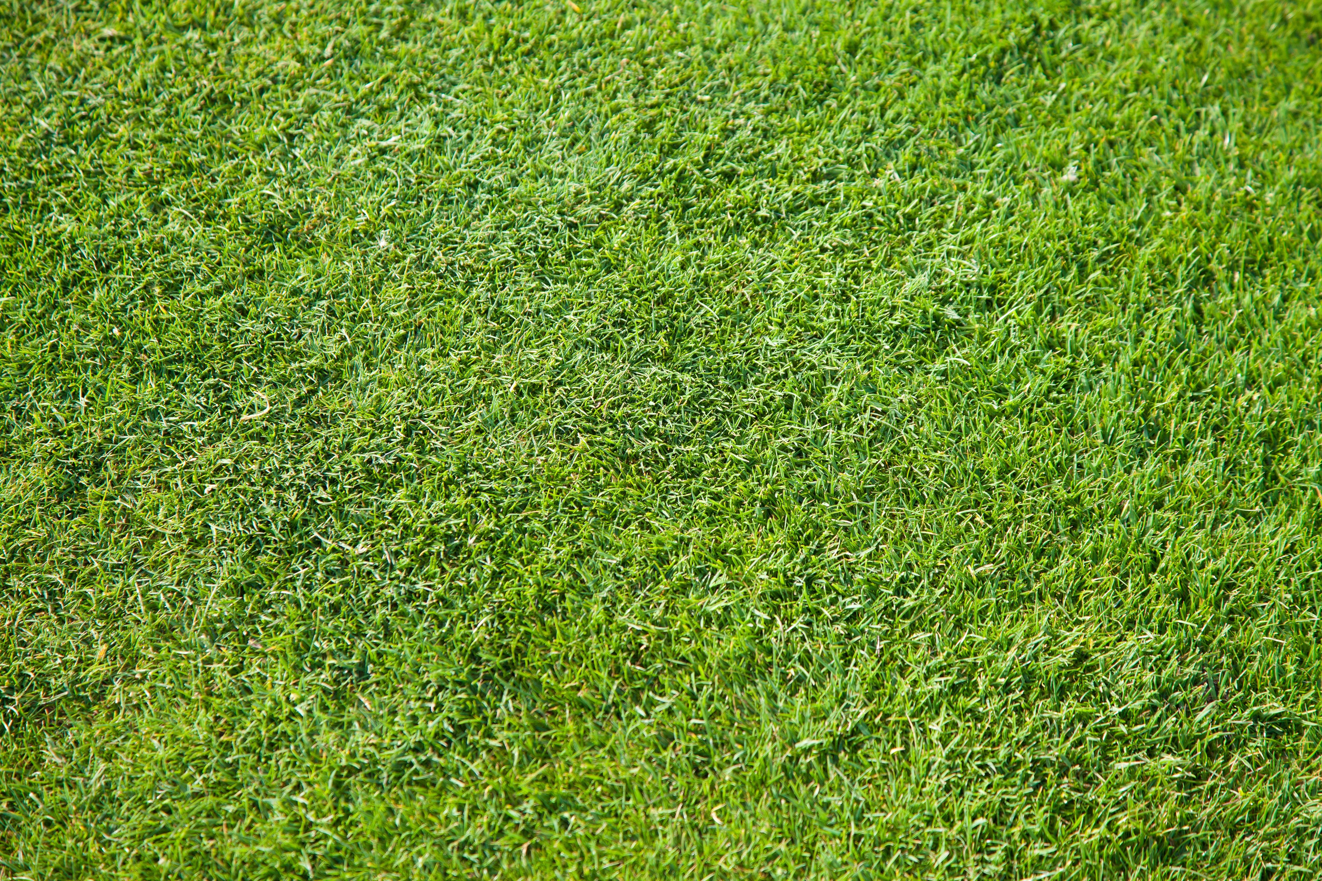 fotos gratis planta campo prado flor verde pastar